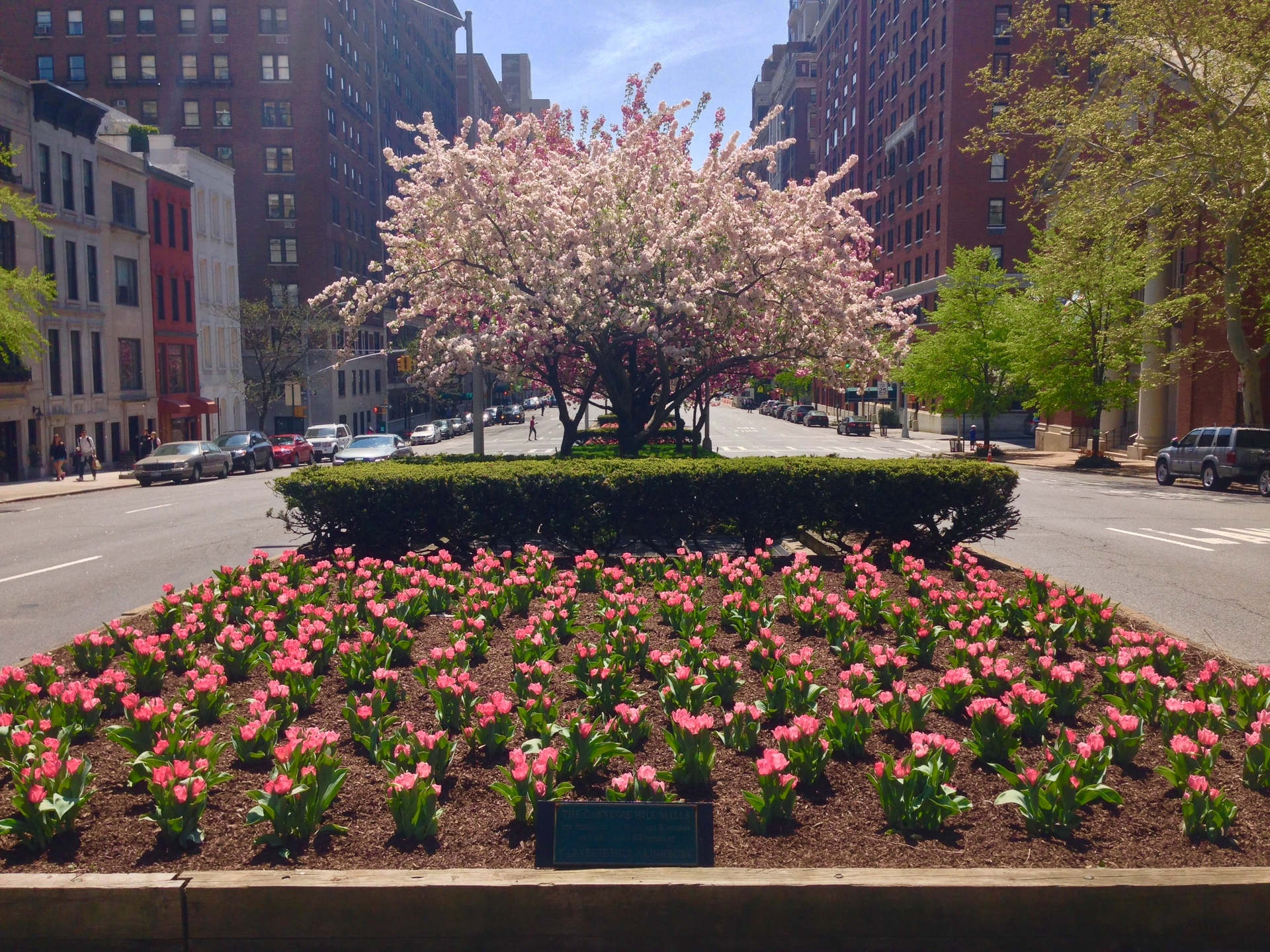 Park Avenue in Spring. Park Avenue taken in the median from 92nd Street looking in the direction of downtown