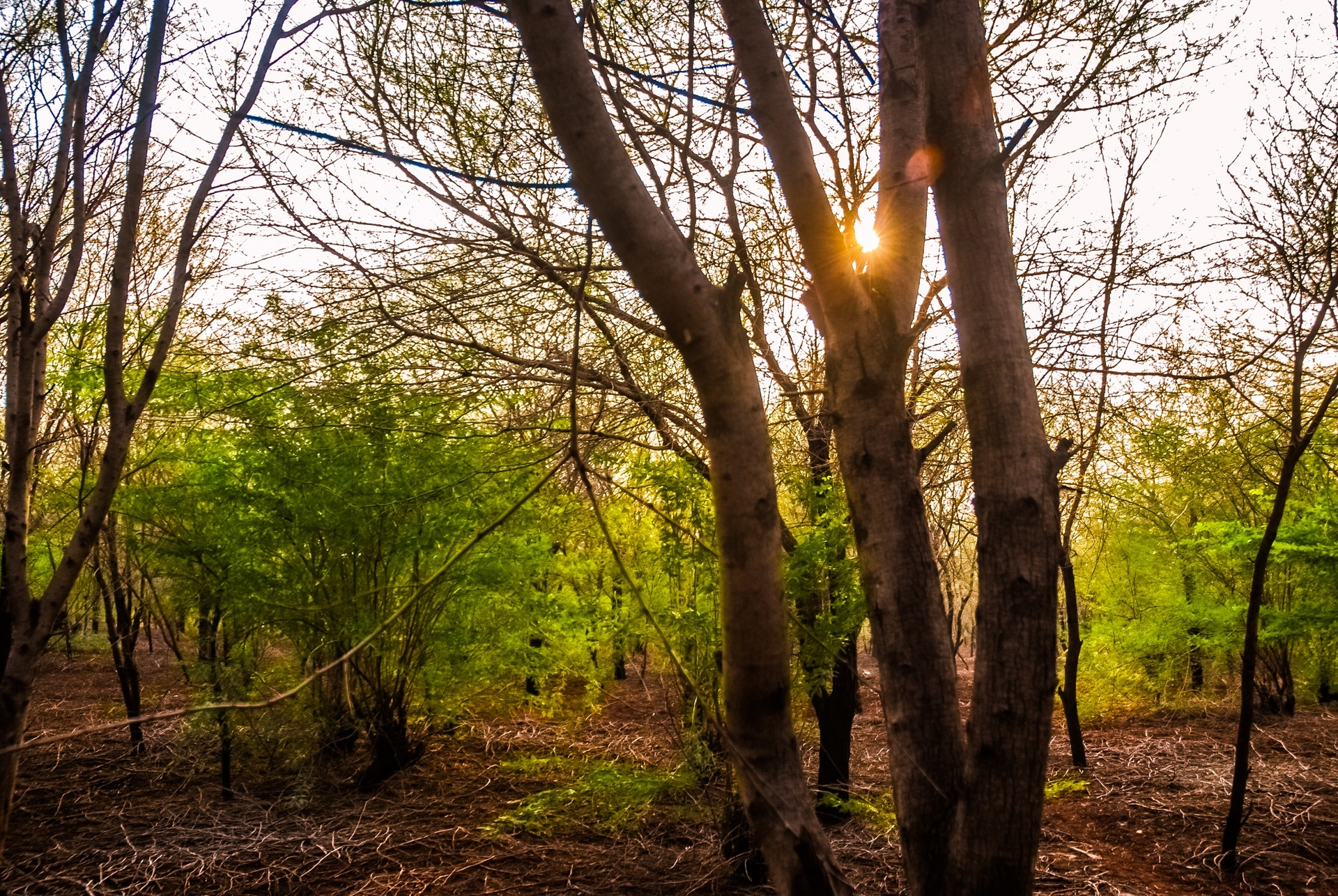 View of forest | nature, photography, color image, horizontal