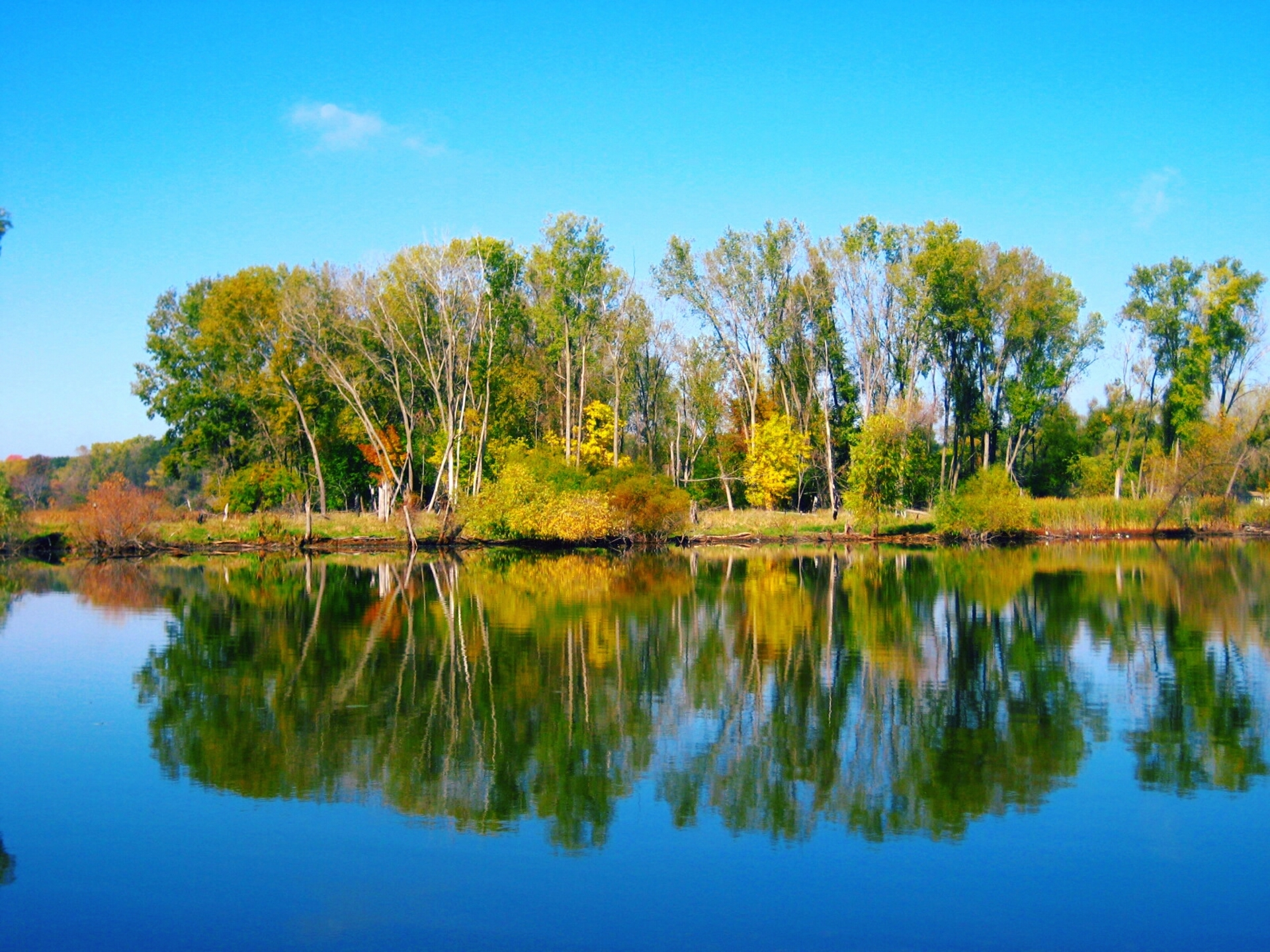 Reflection | shalicia.johnson, calm, forest, lake