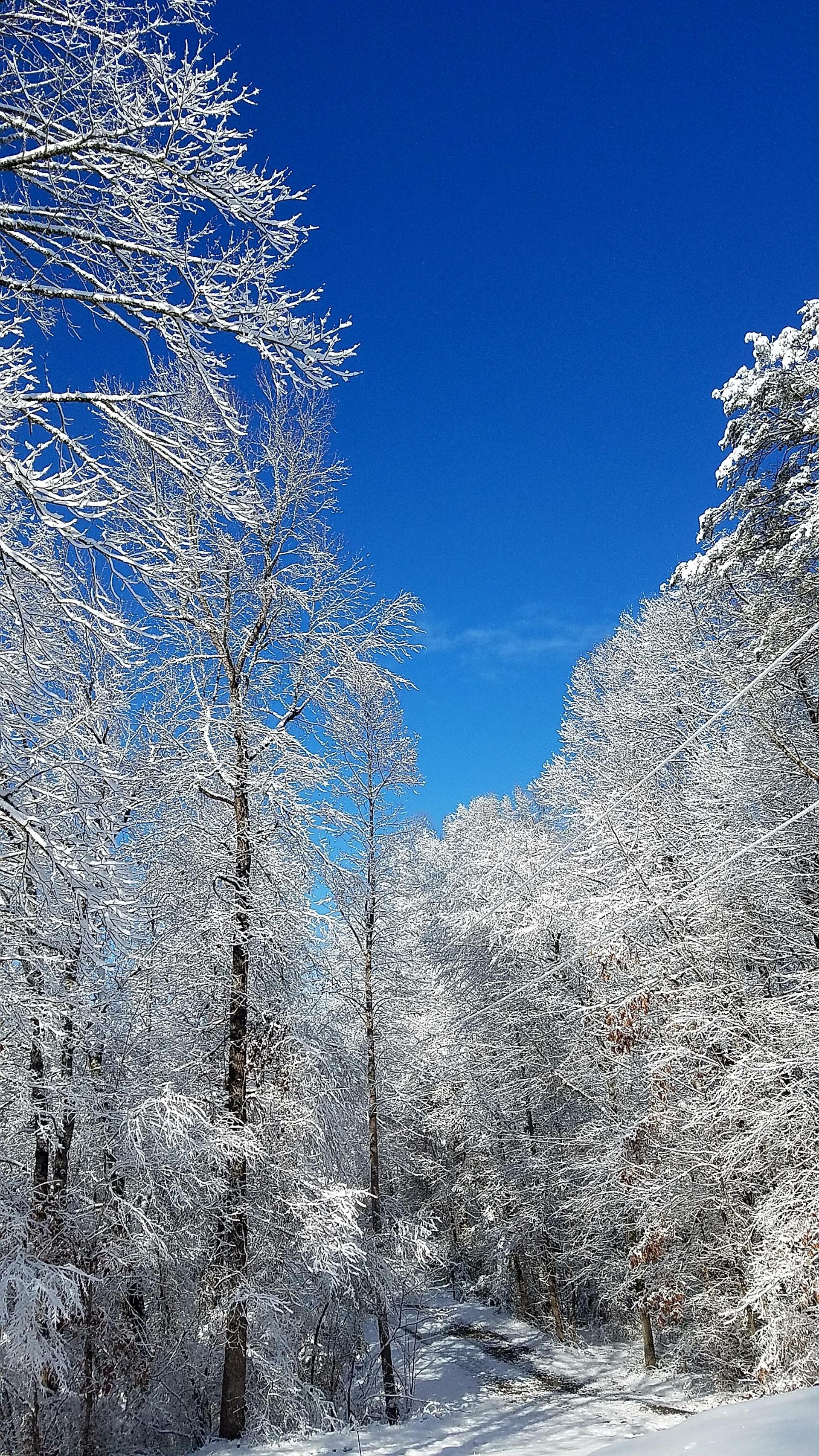 snowy down my driveway | bratsnaps, snow, trees, winter