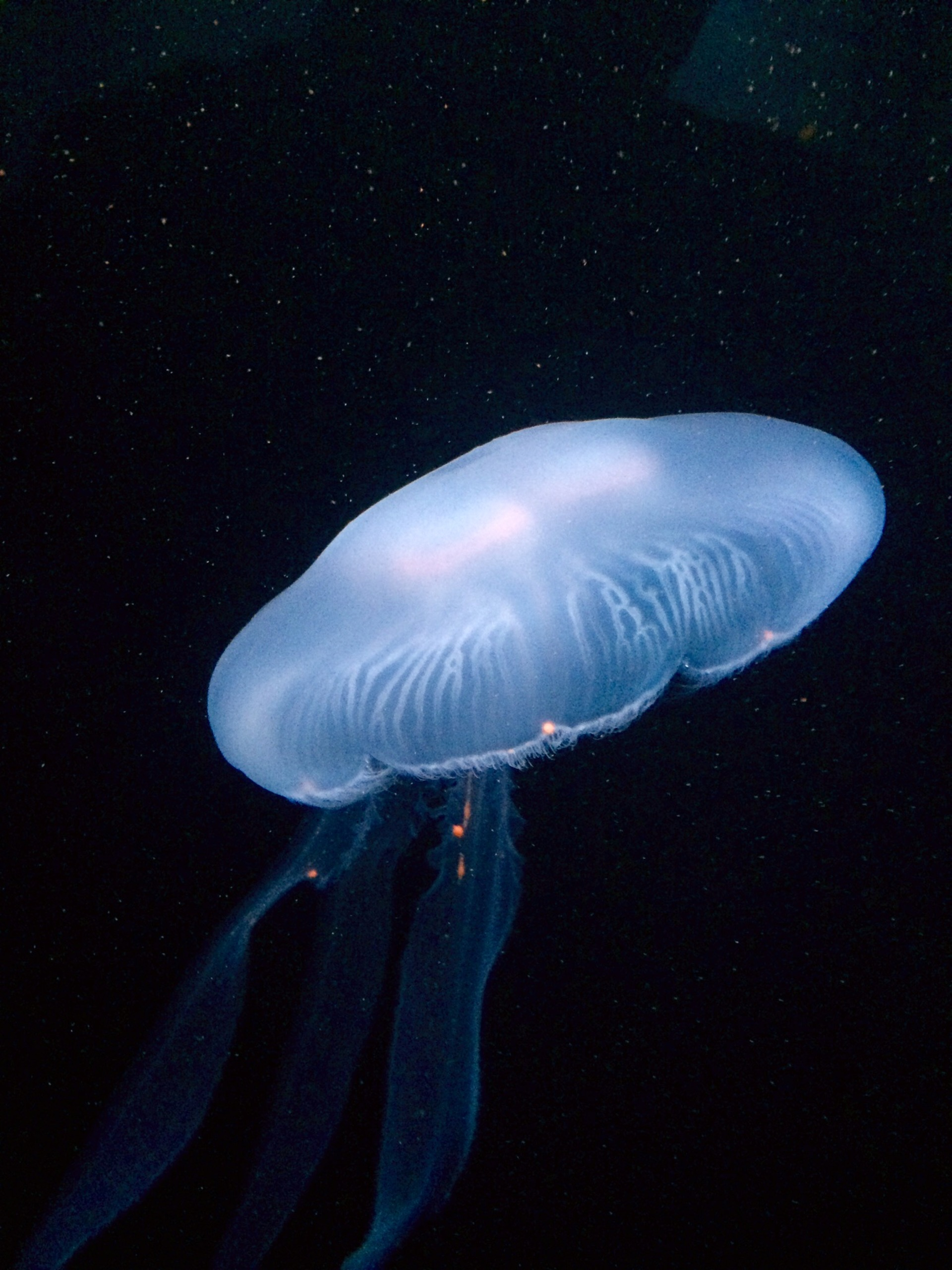 Jelly fish | deep, beautiful, poison, blue