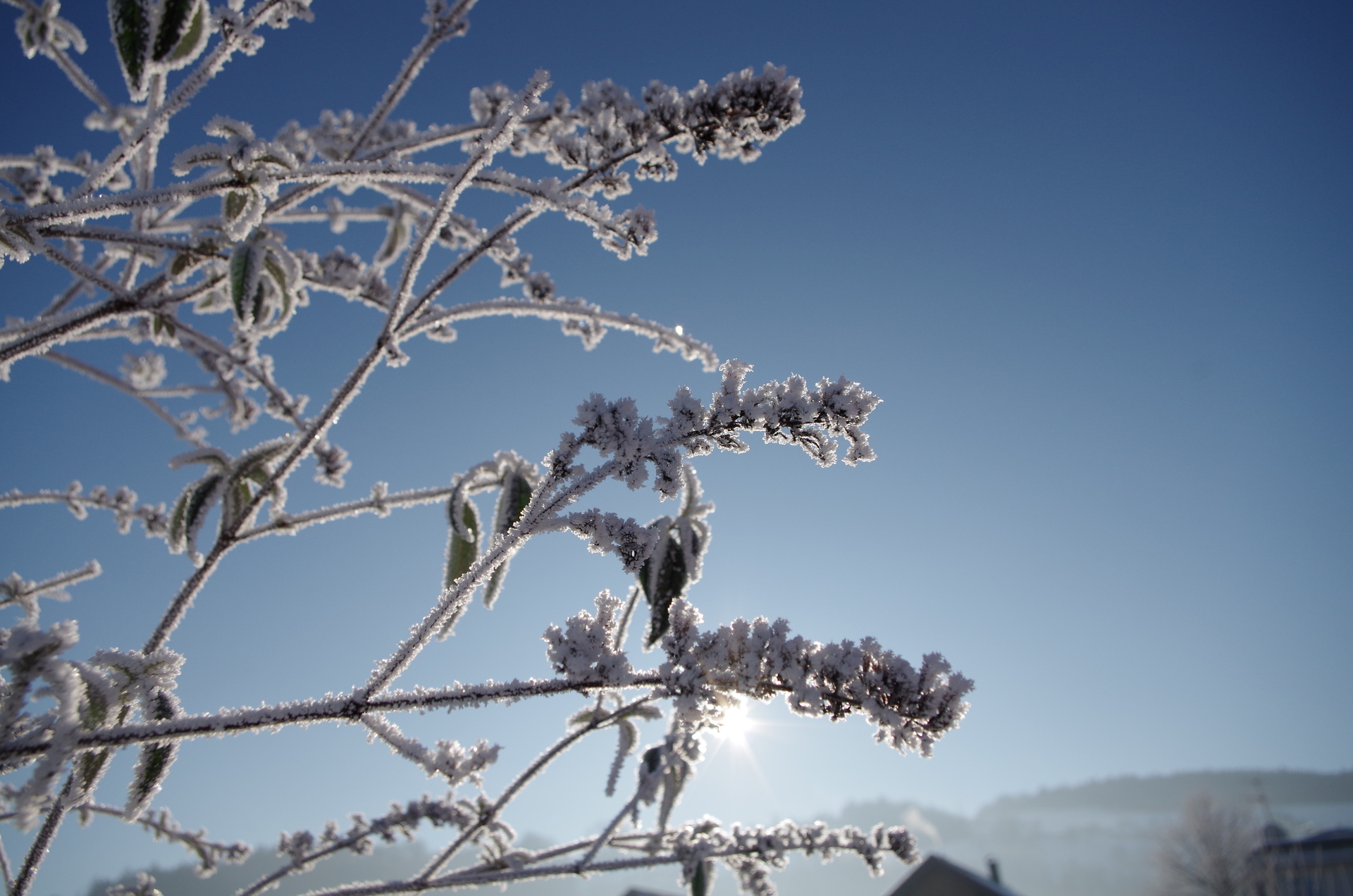 winter | snow, frost, tree, cold