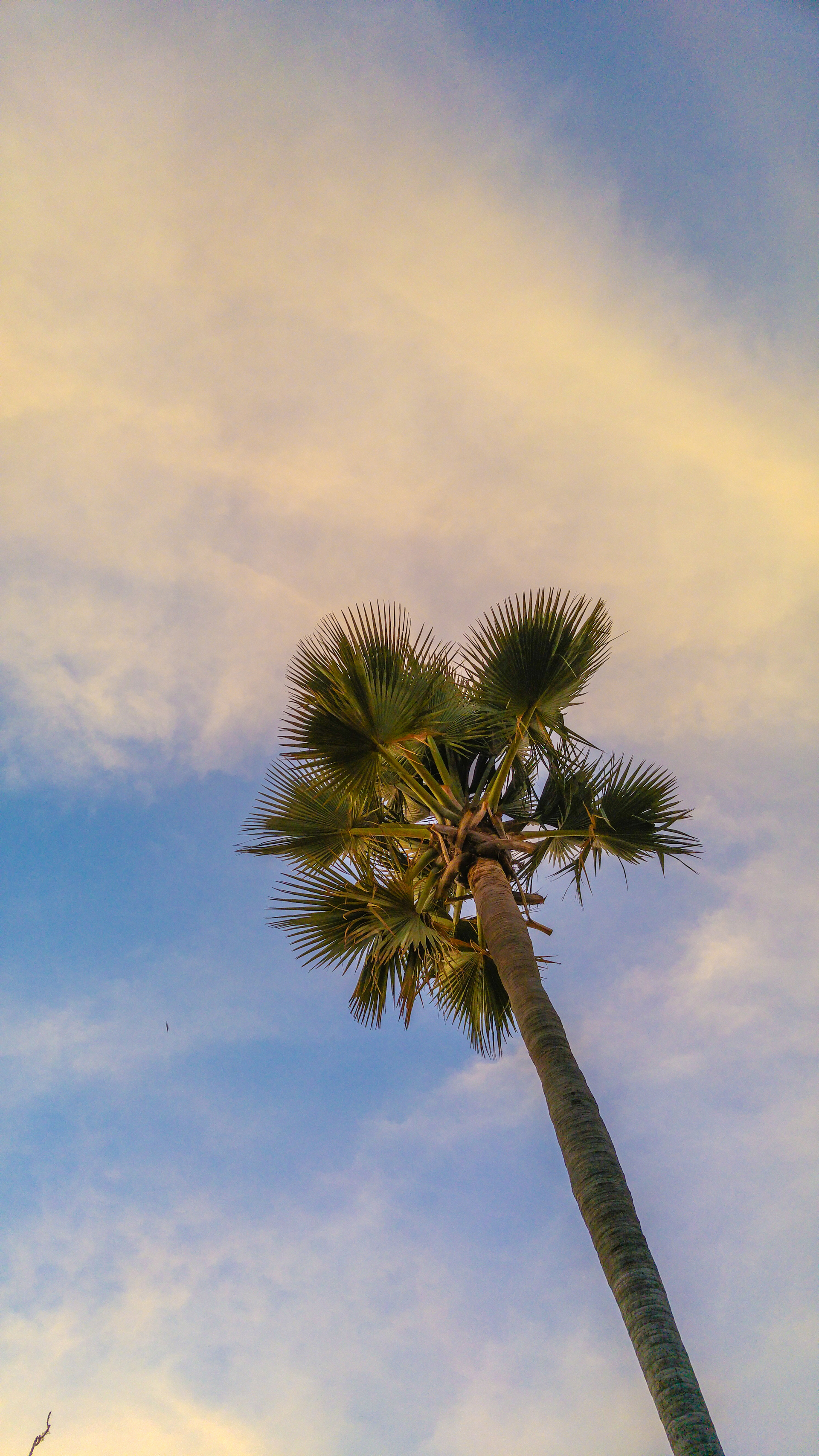 🌴 palmtree in s | xavie, blue sky, exotic, leaf