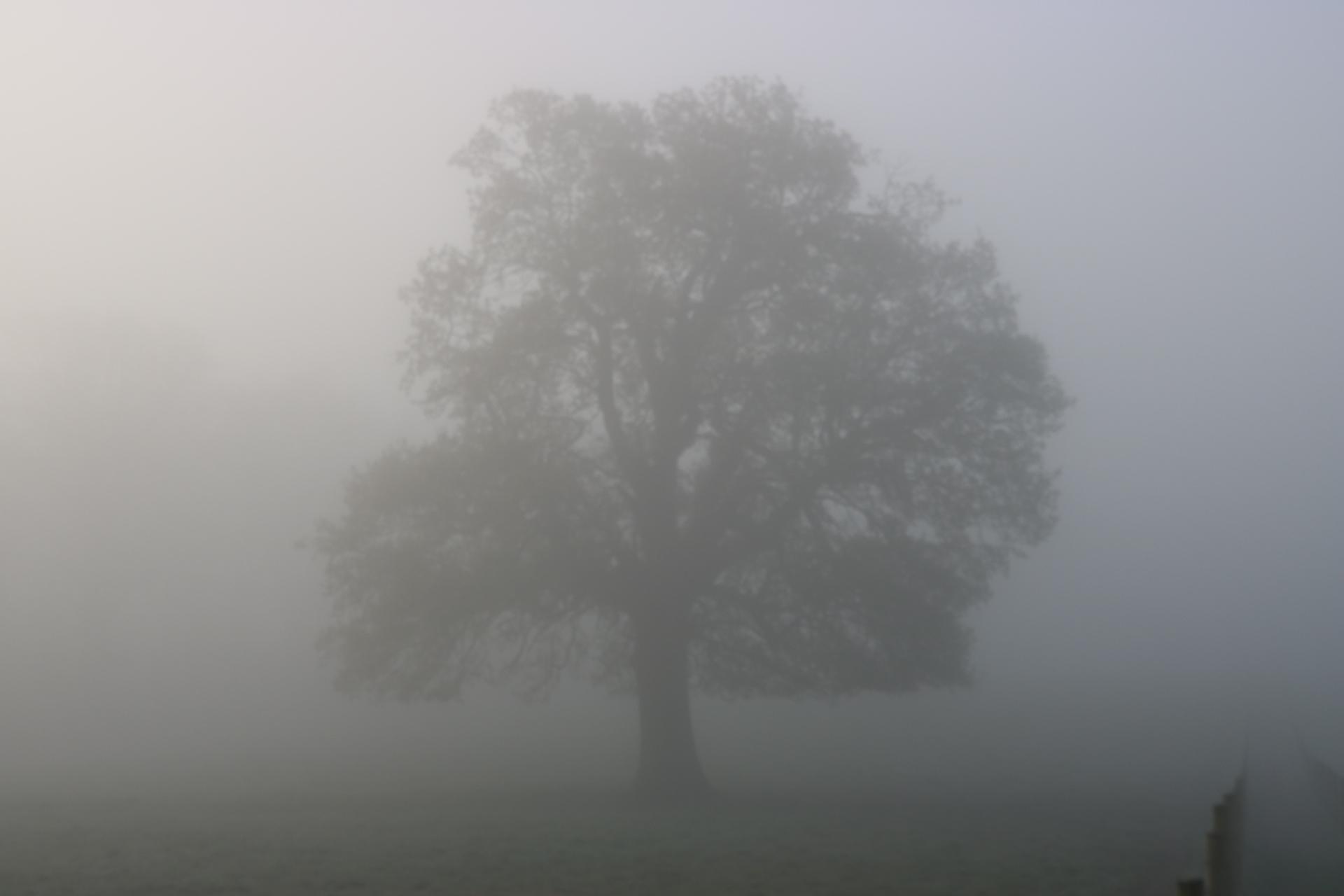 Misty    greendub, art, dawn, fog