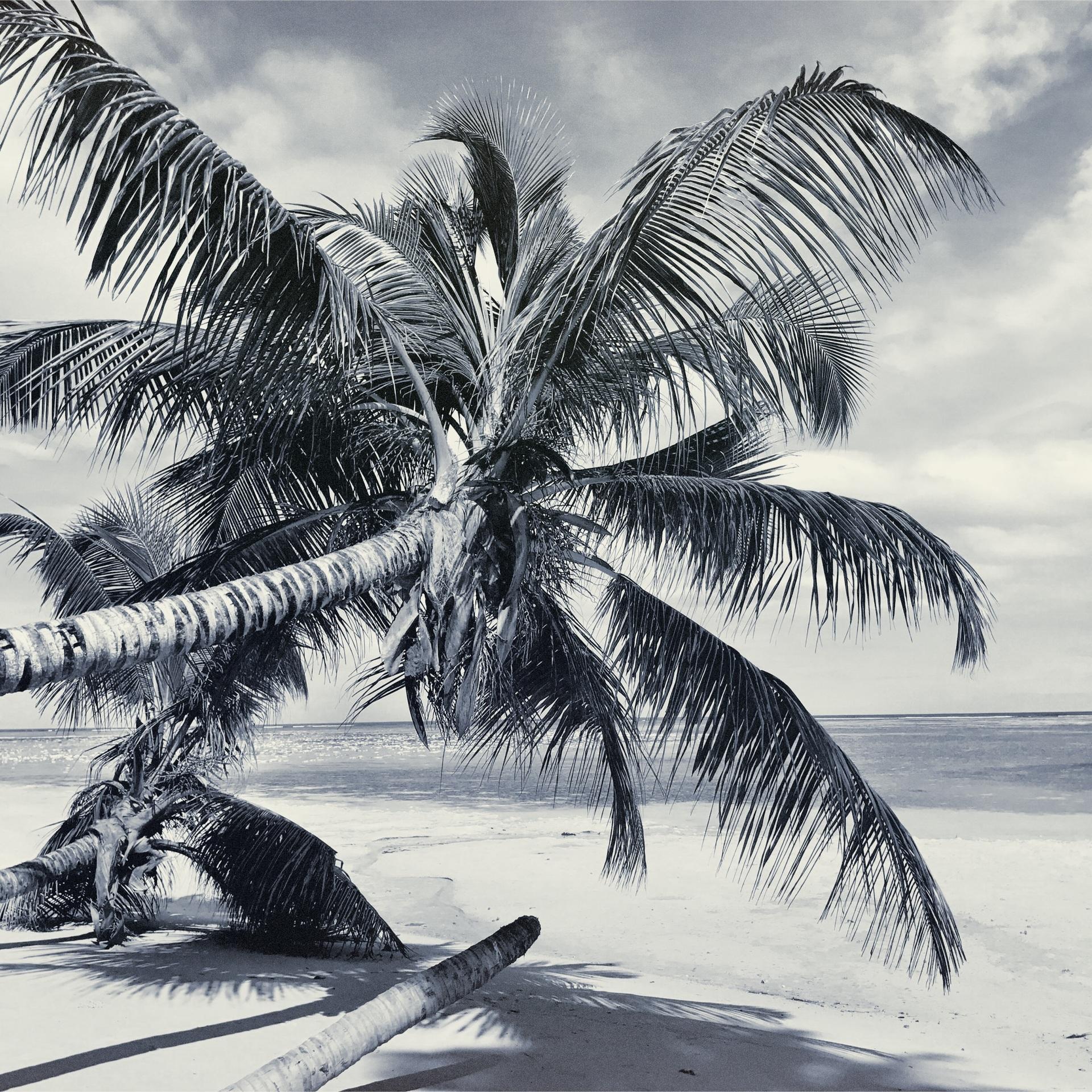 Beach, Palm, Tropical, Sand, Seashore