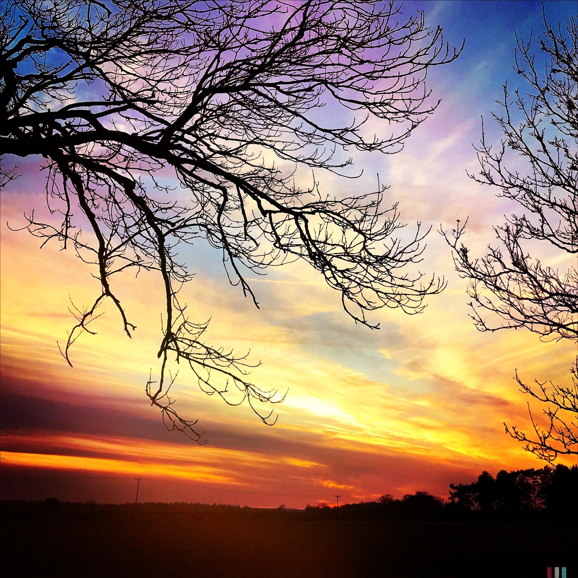 Autumnal silhouette tree | mezmic, sunset, dawn, landscape