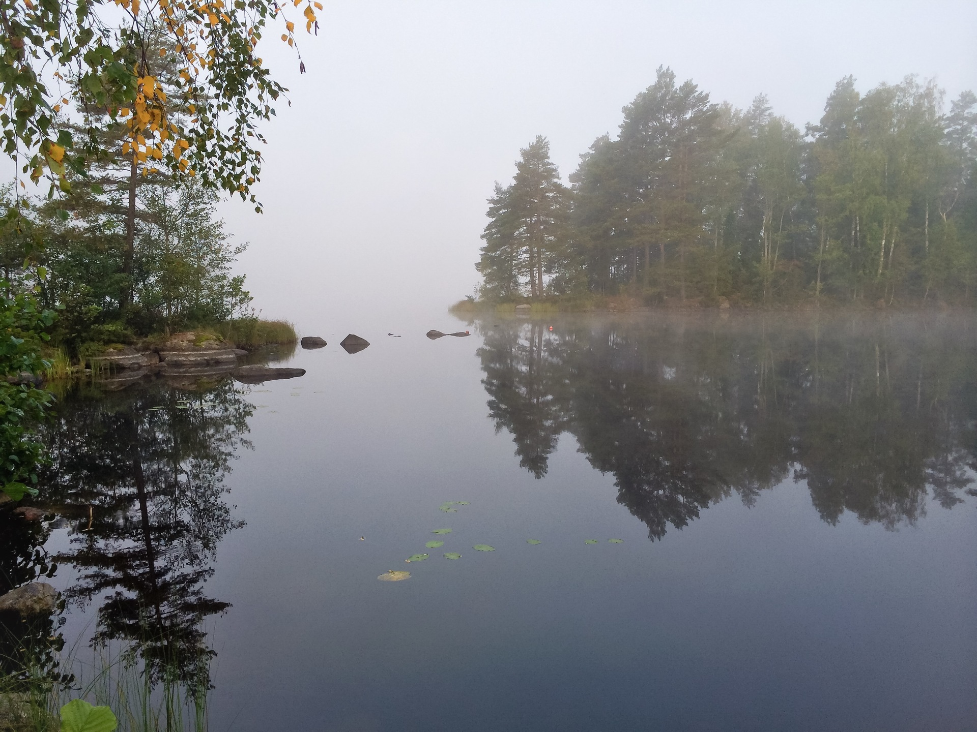 Incredible reflections | akilles, autumn, fog, forest