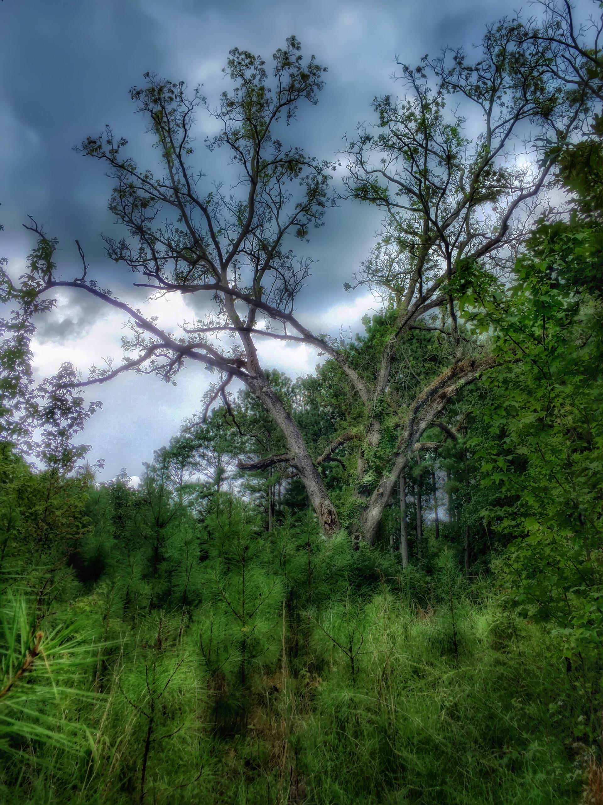 wood   tree, landscape, nature, no person