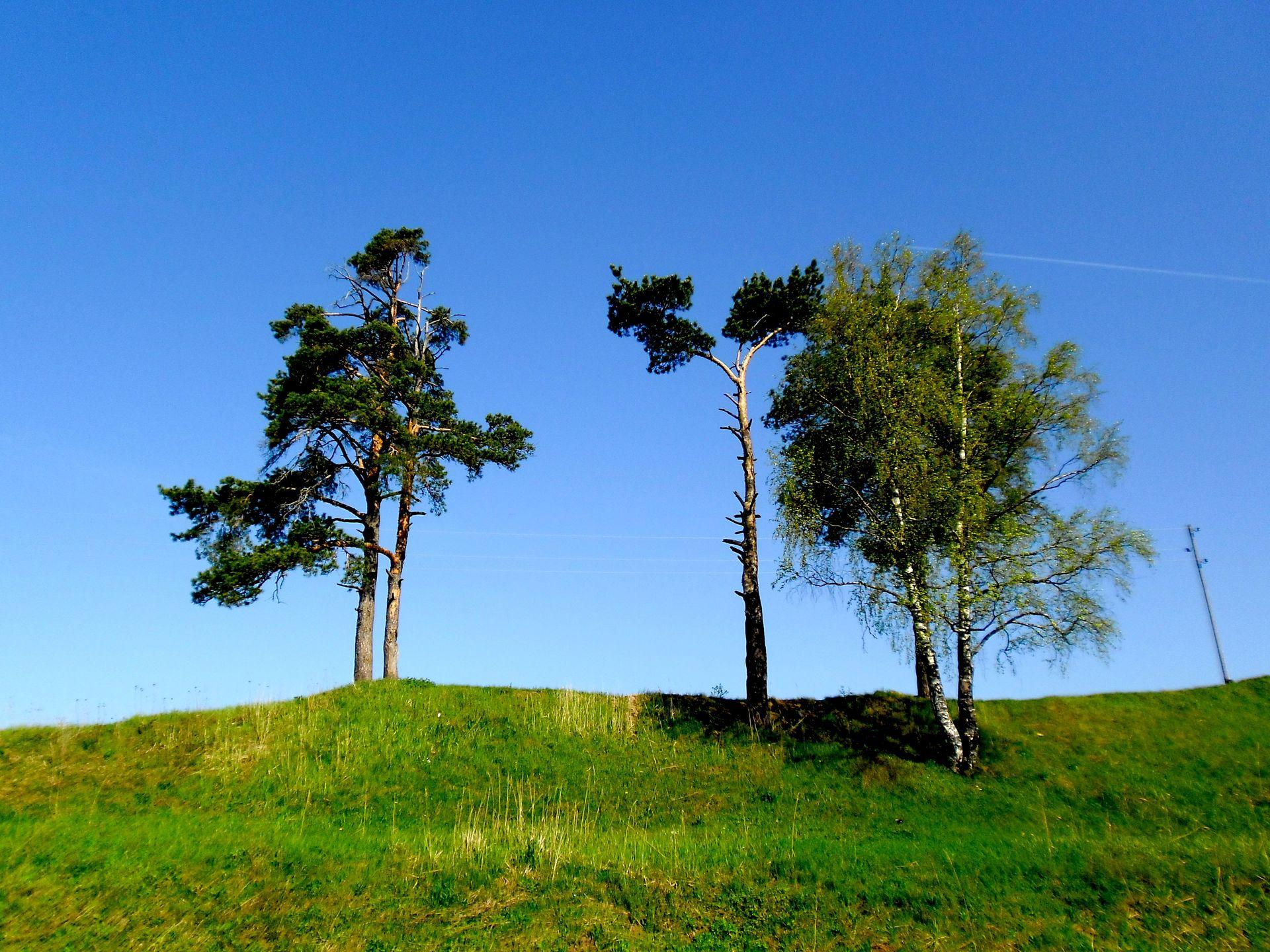 Tree, Landscape, Nature, Grass, Wood