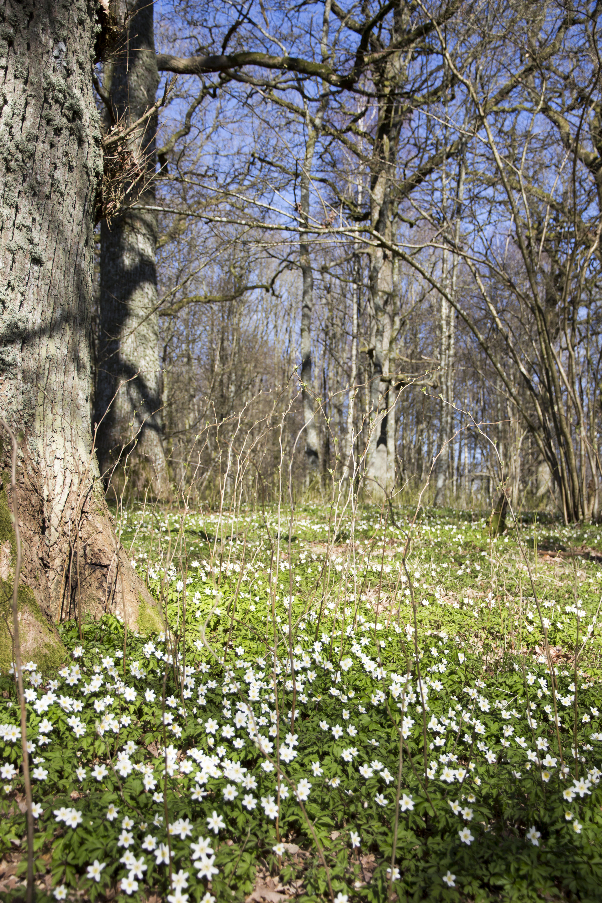 Wildflowers growing in forest | spring, nature, summer, flower
