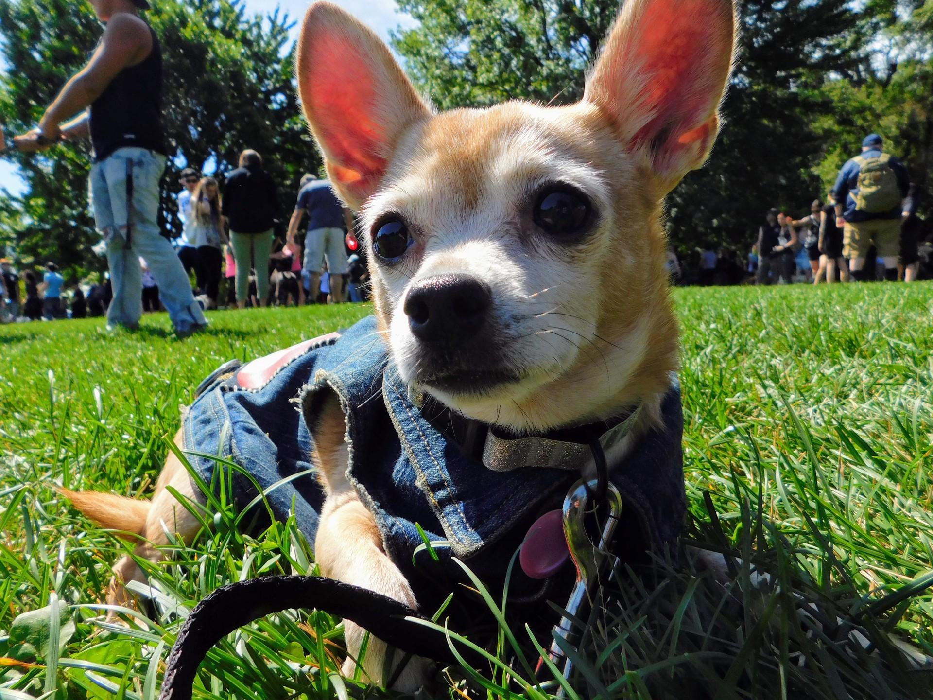 Dog days of summer | rick.cognyl.fournier, animal, canine, cute