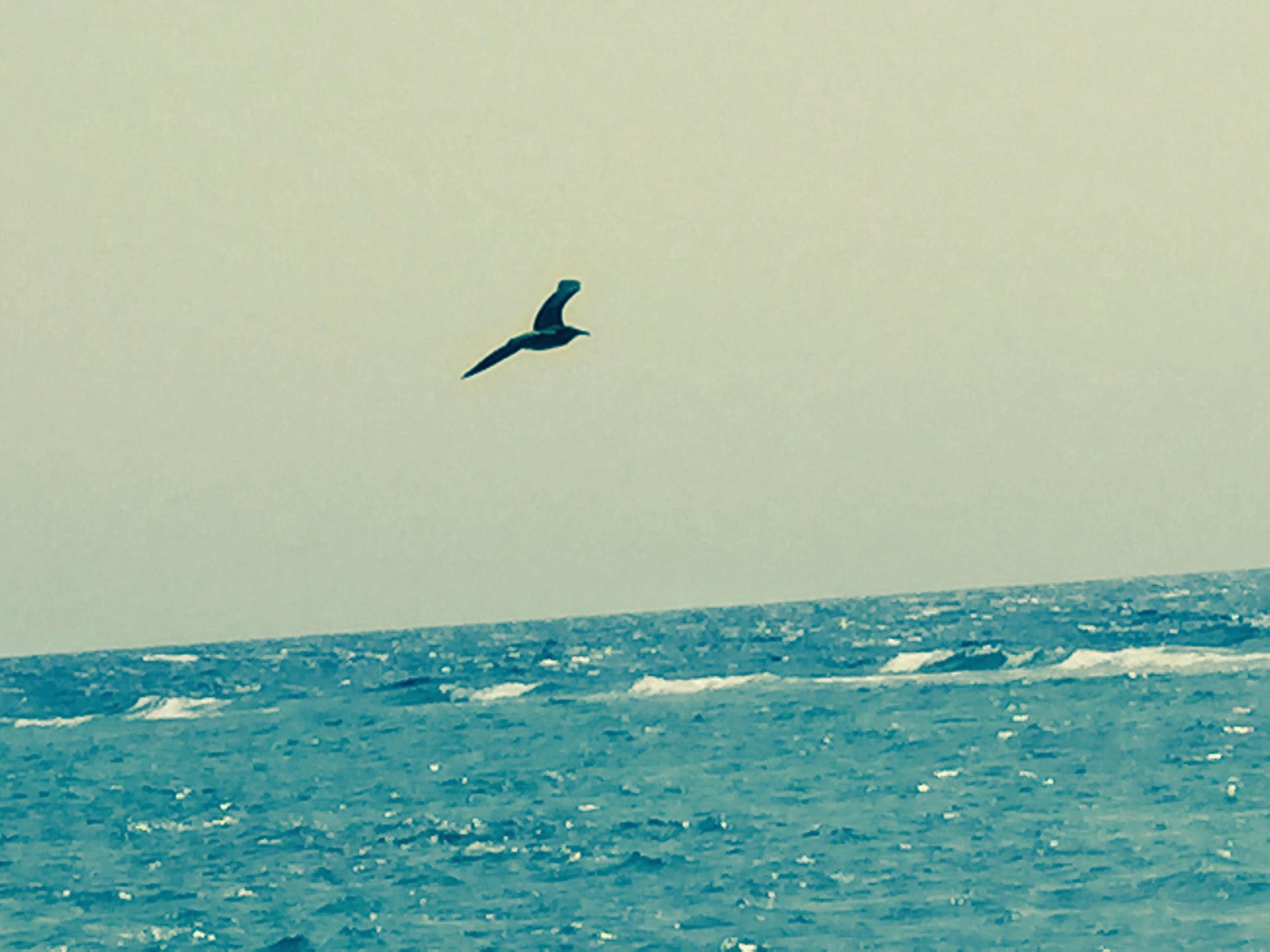 Flying    water, sky, sea, outdoors