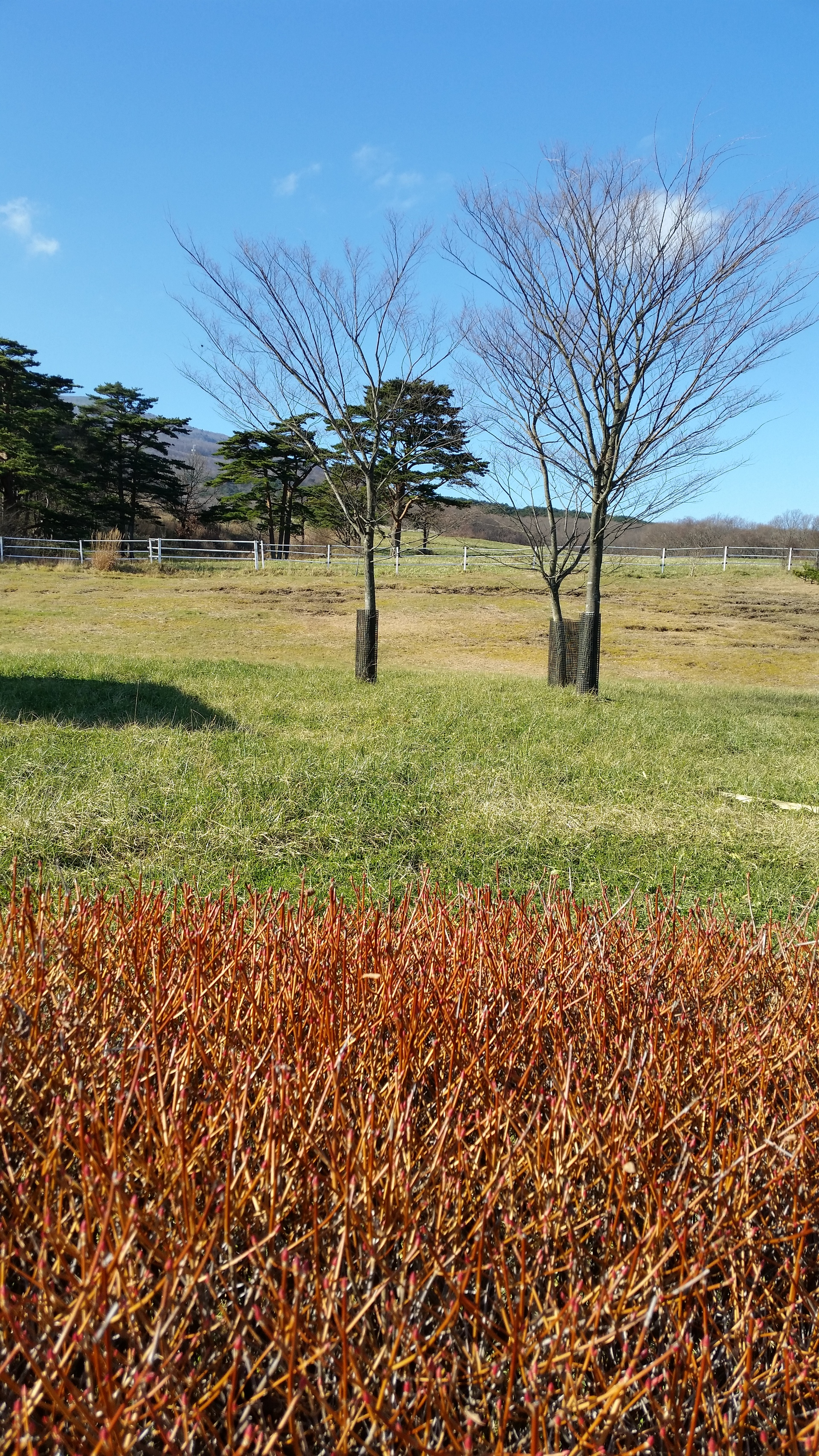 Colorful ranch | present4_u, agriculture, field, grass