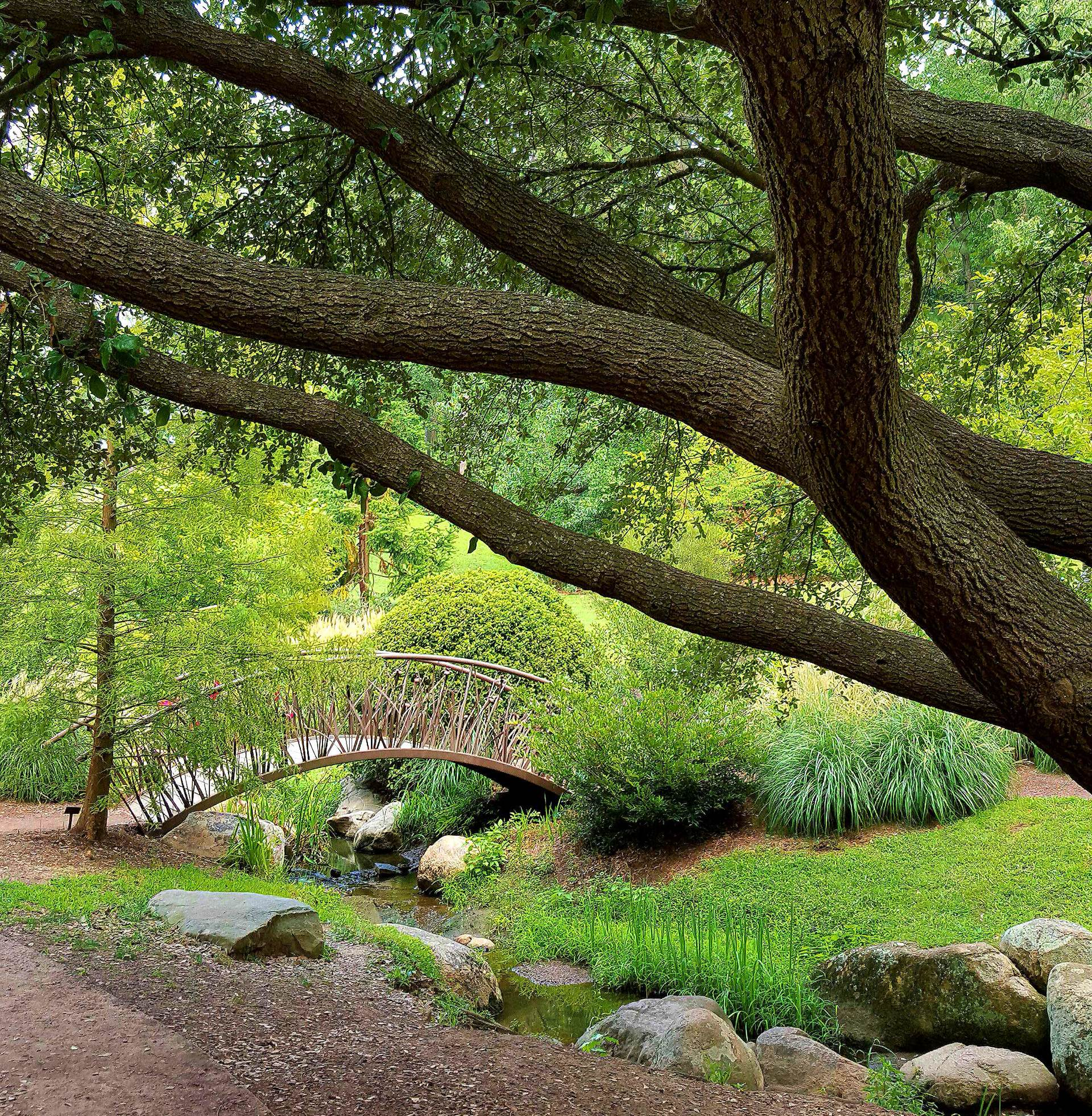 Scenic view of duke gardens in durham north carolina