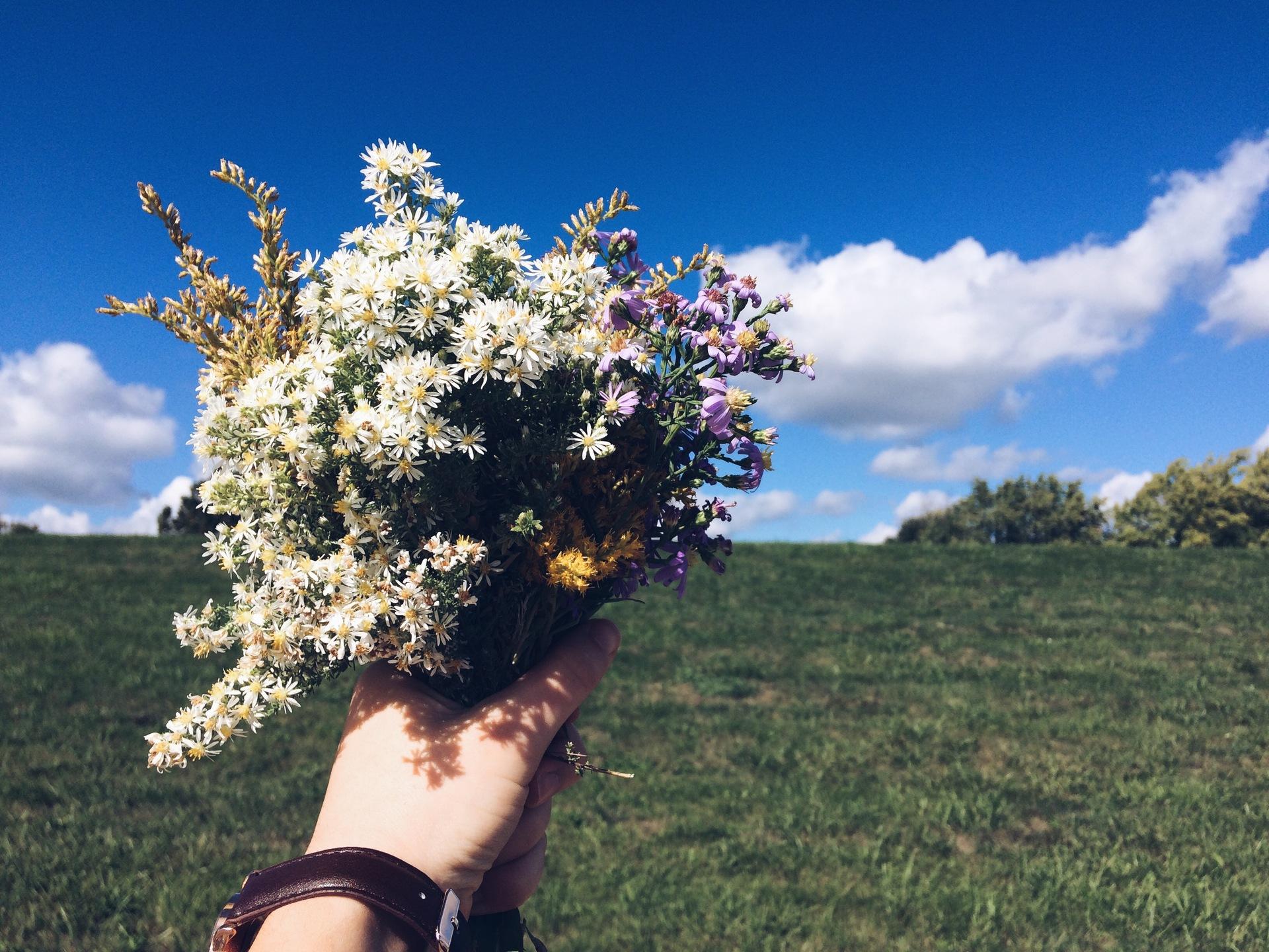 tree | nature, landscape, flower, summer