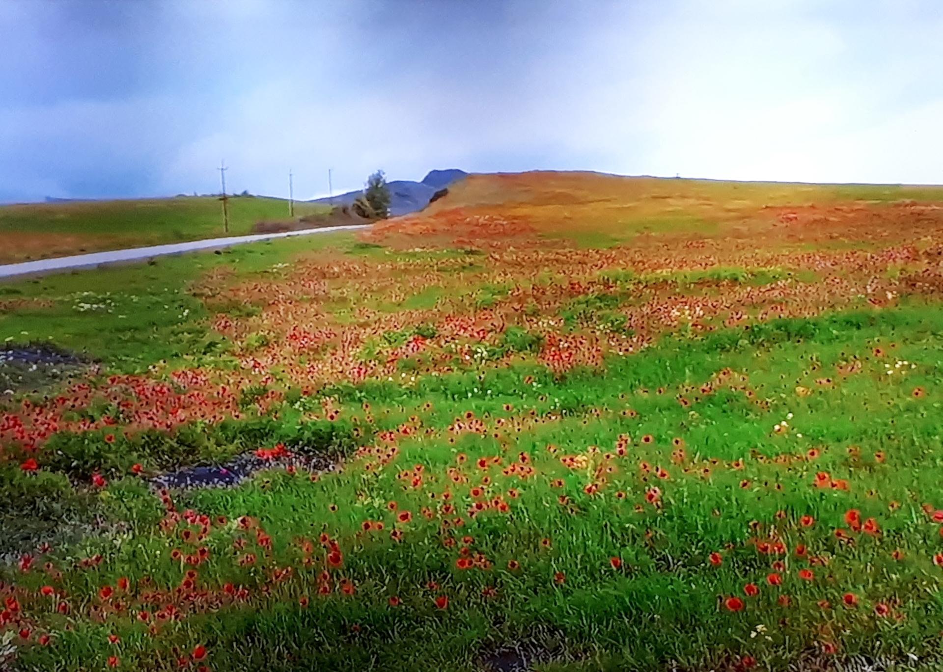 Beautiful nature_Arenia   anait.unanyan, flower, landscape, nature