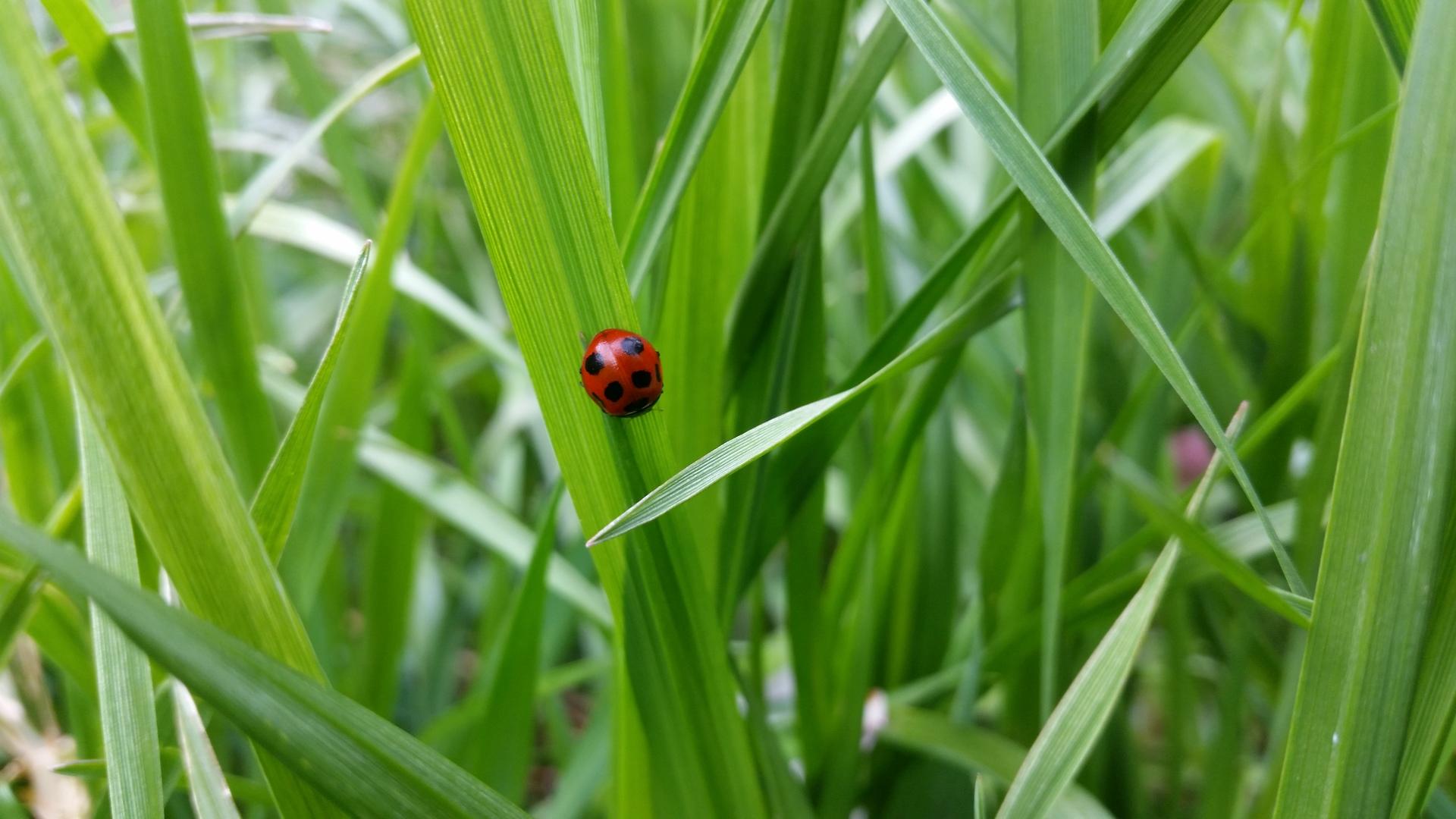 Ladybug | present4_u, environment, field, garden