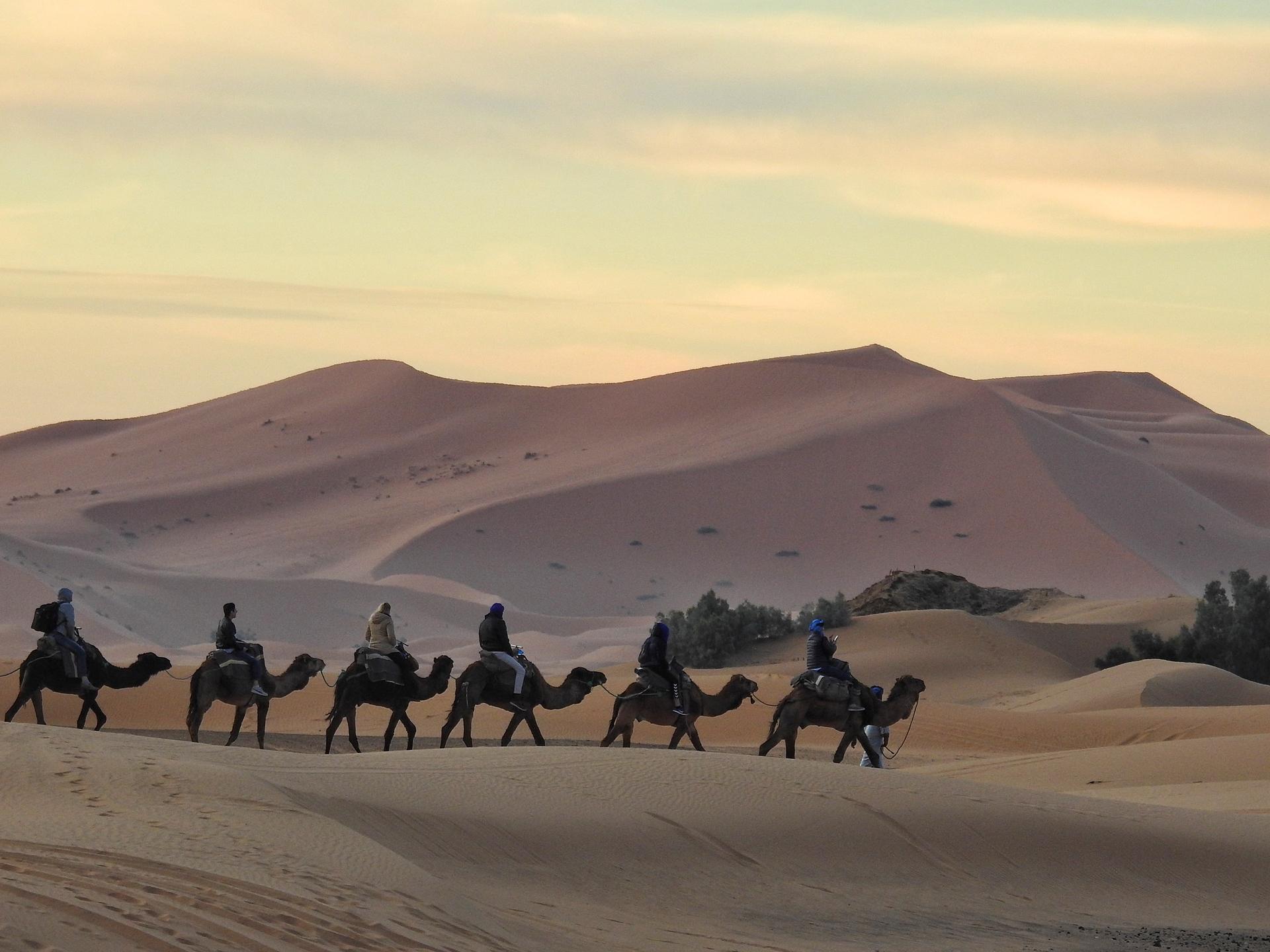 Hiking the desert | shec, adventure, camel, caravan