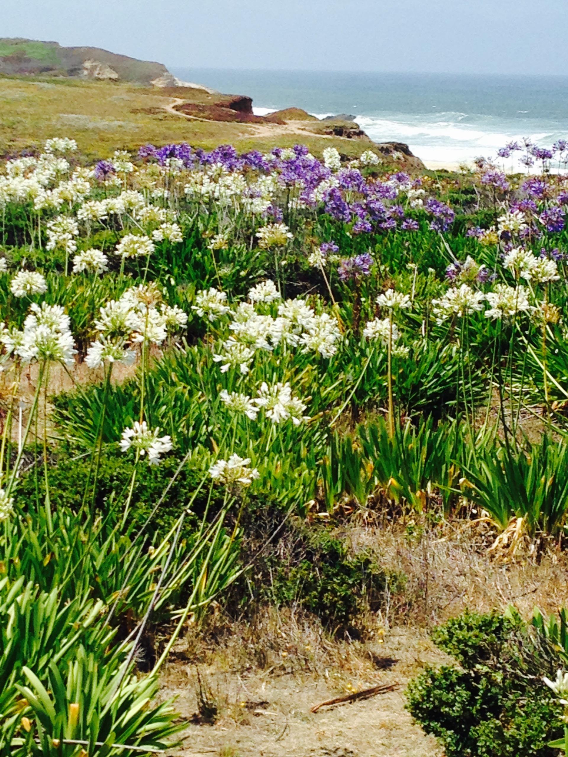 flower | nature, flora, grass, landscape