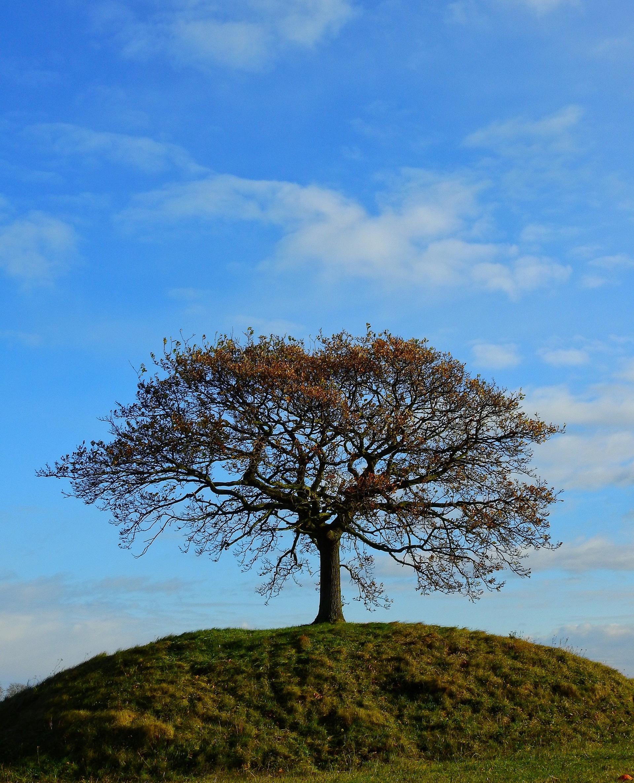 Oak in solitude | shec, alone, blue sky, branch