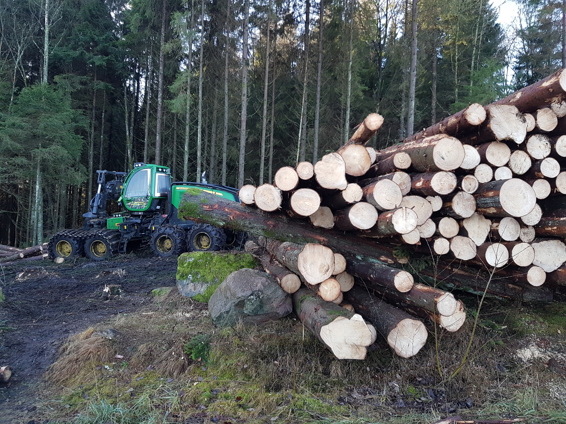 Deforestation | aldylady33, tree log, wood, firewood