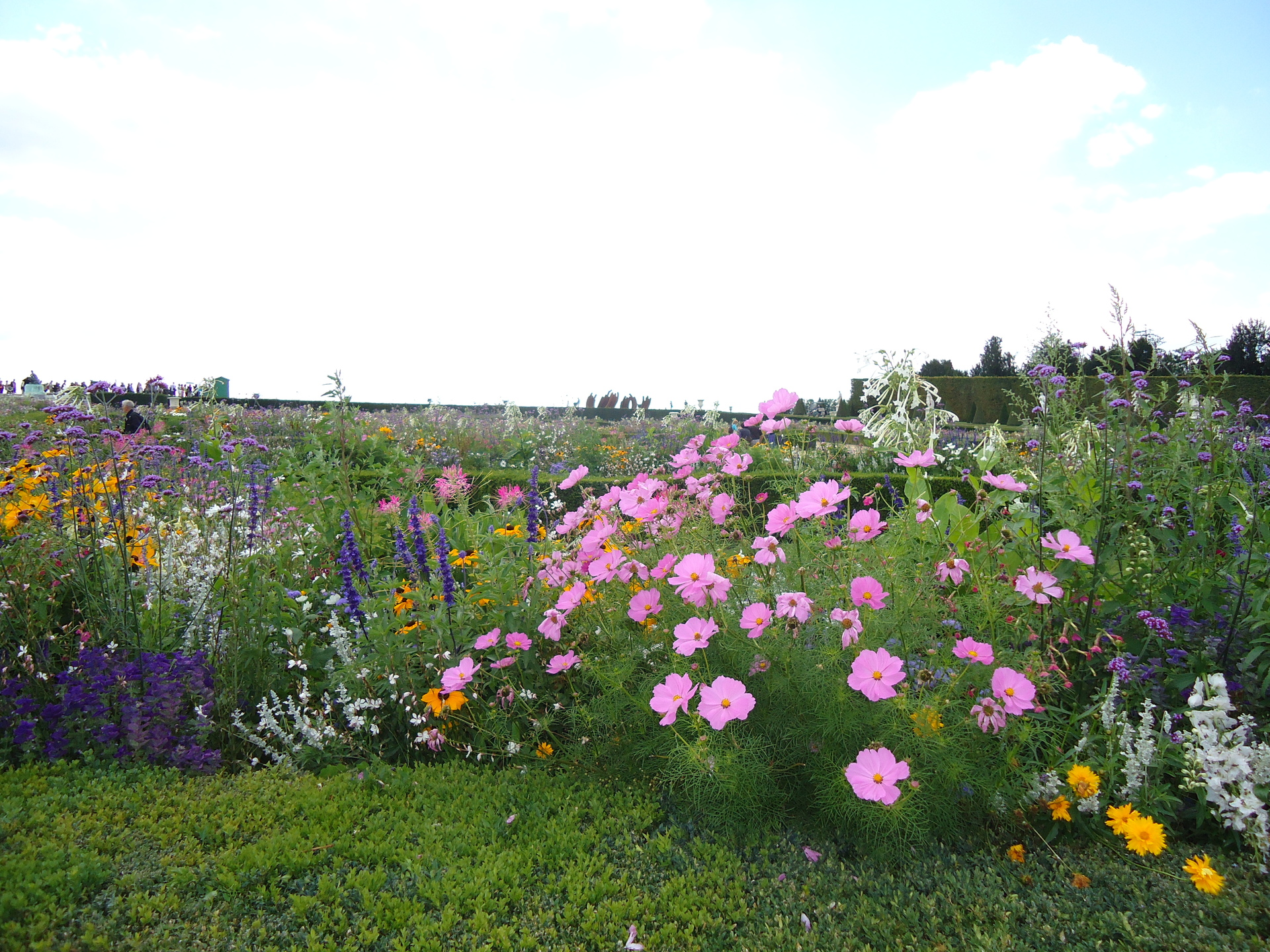 Flower | bashir.tabibi, flower, landscape, nature