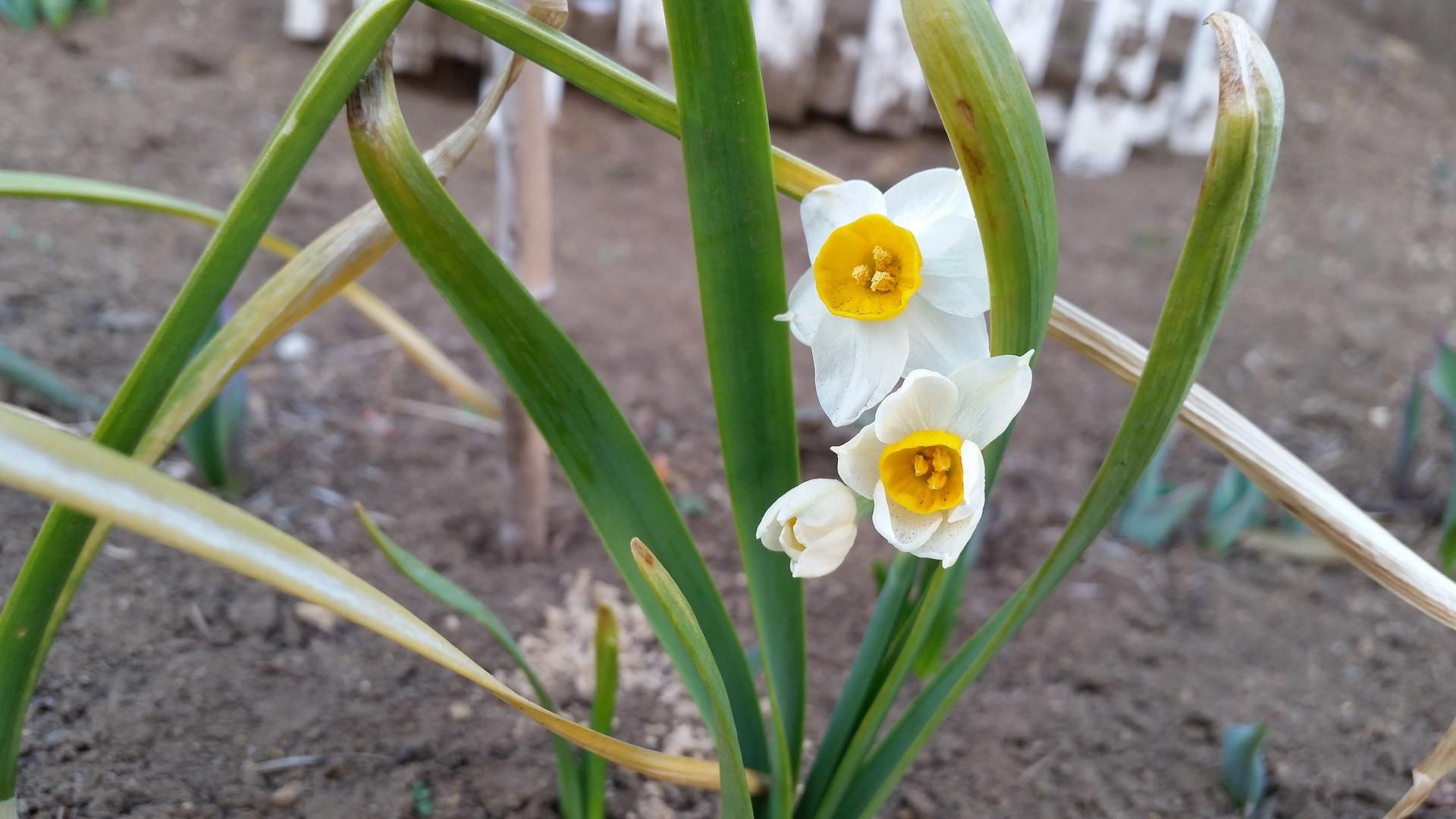 spring is coming soon! | present4_u, flora, flower, garden