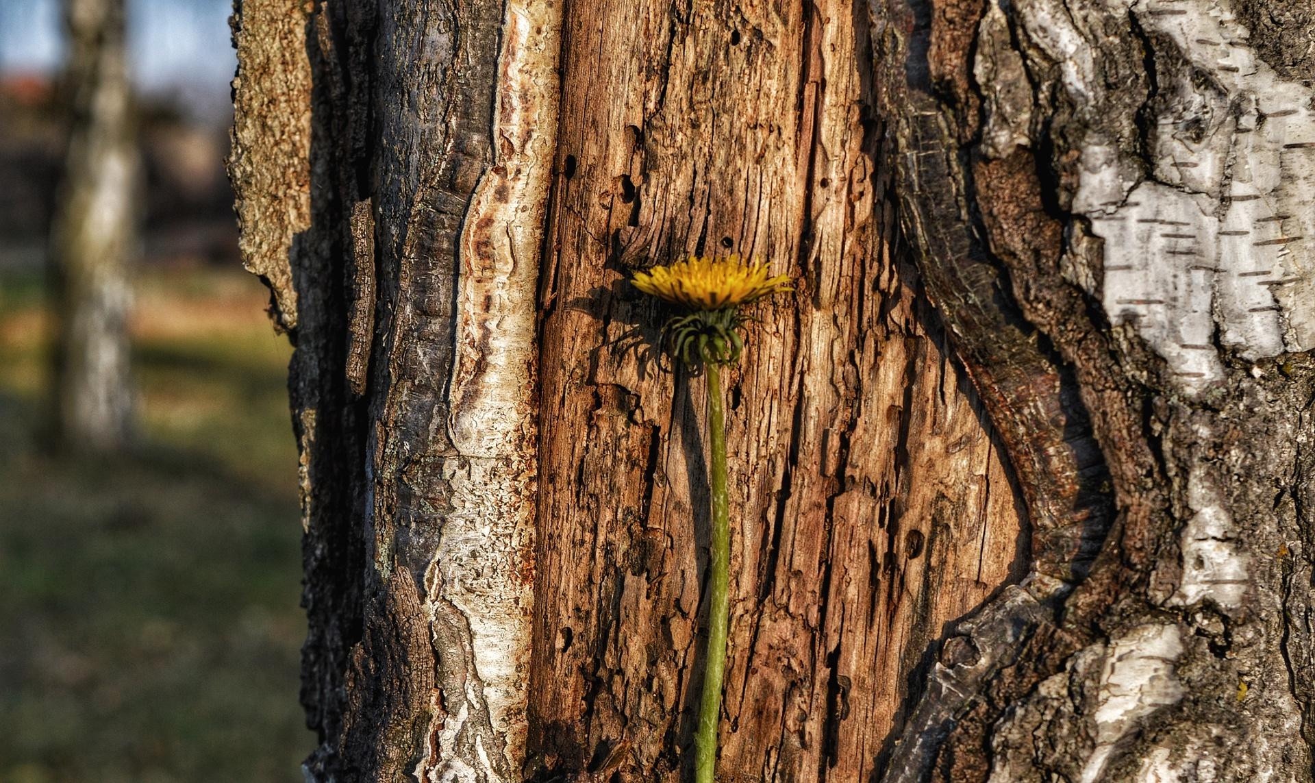 Bark, Tree, Wood, Trunk, Nature