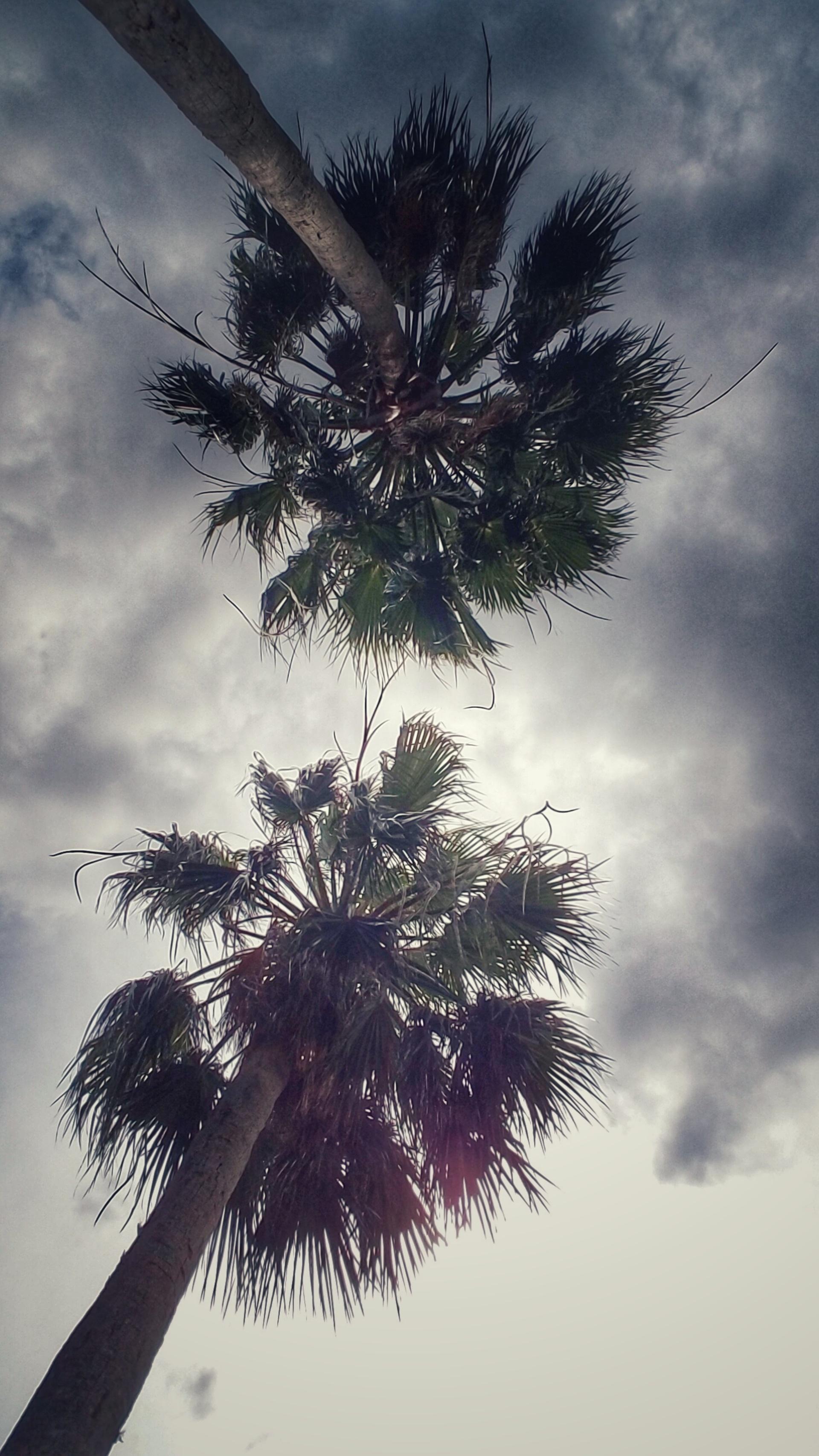 Palm tree under the sky