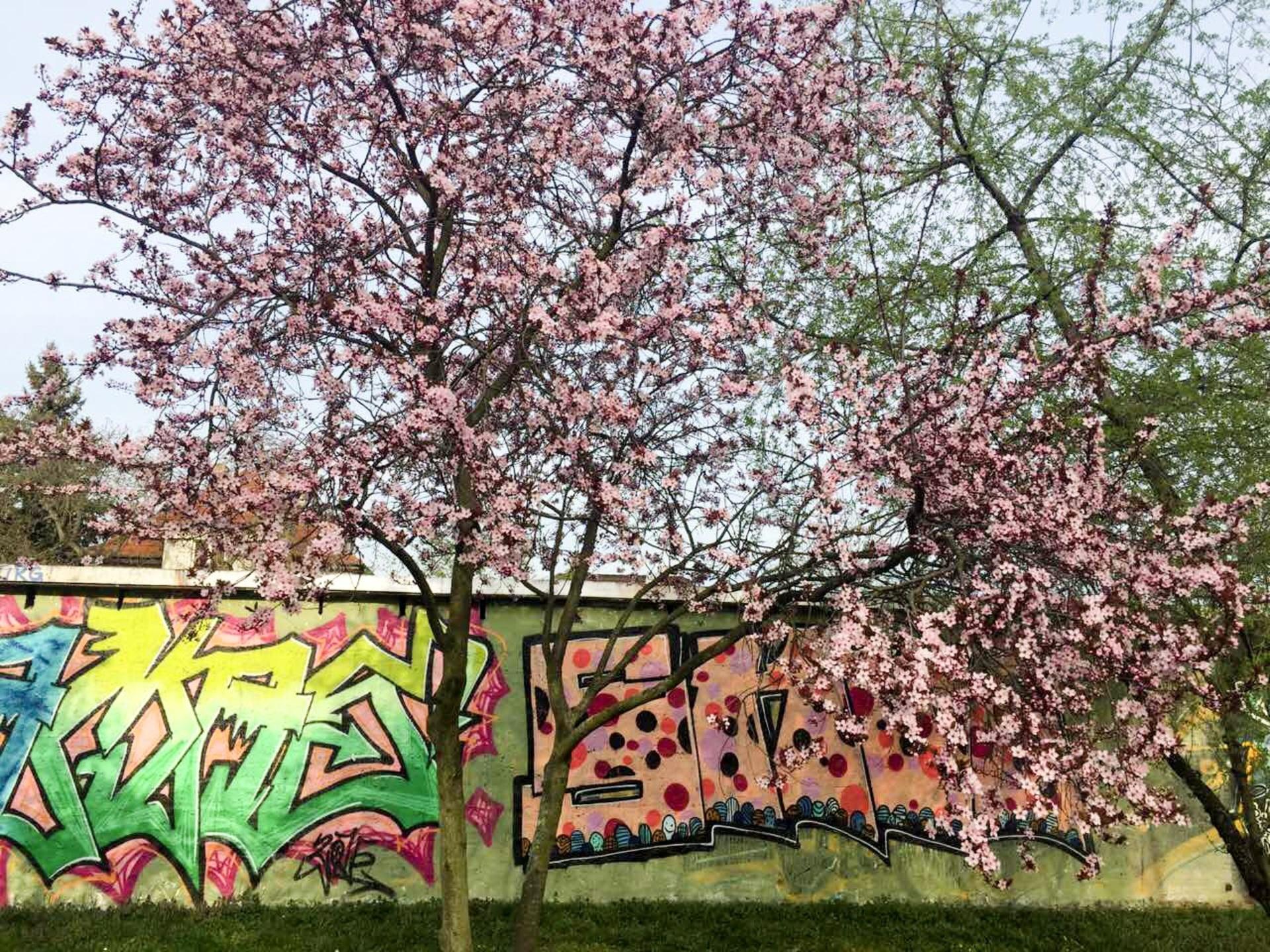 Spring flowers  | tree, springtime, season, park