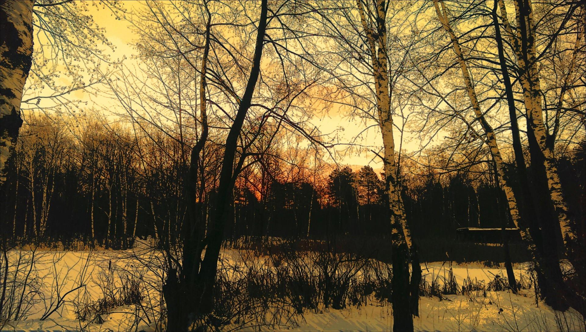 Sunrise   nastia95, forest, landscape, morning