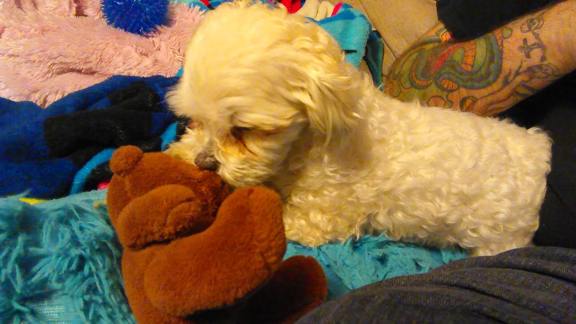 Dog gives Teddy Bear a bath
