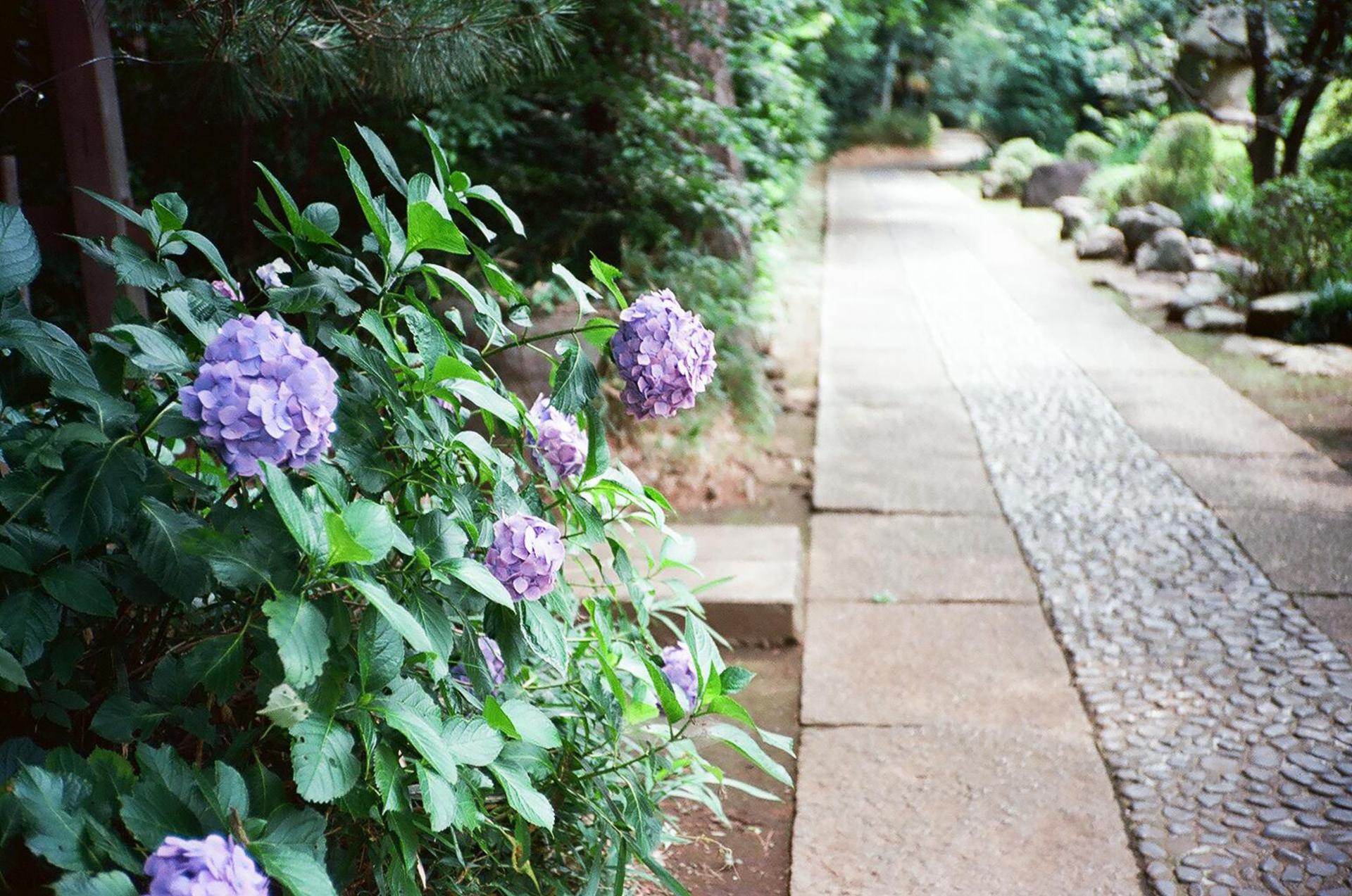 flower | garden, no person, flora, leaf