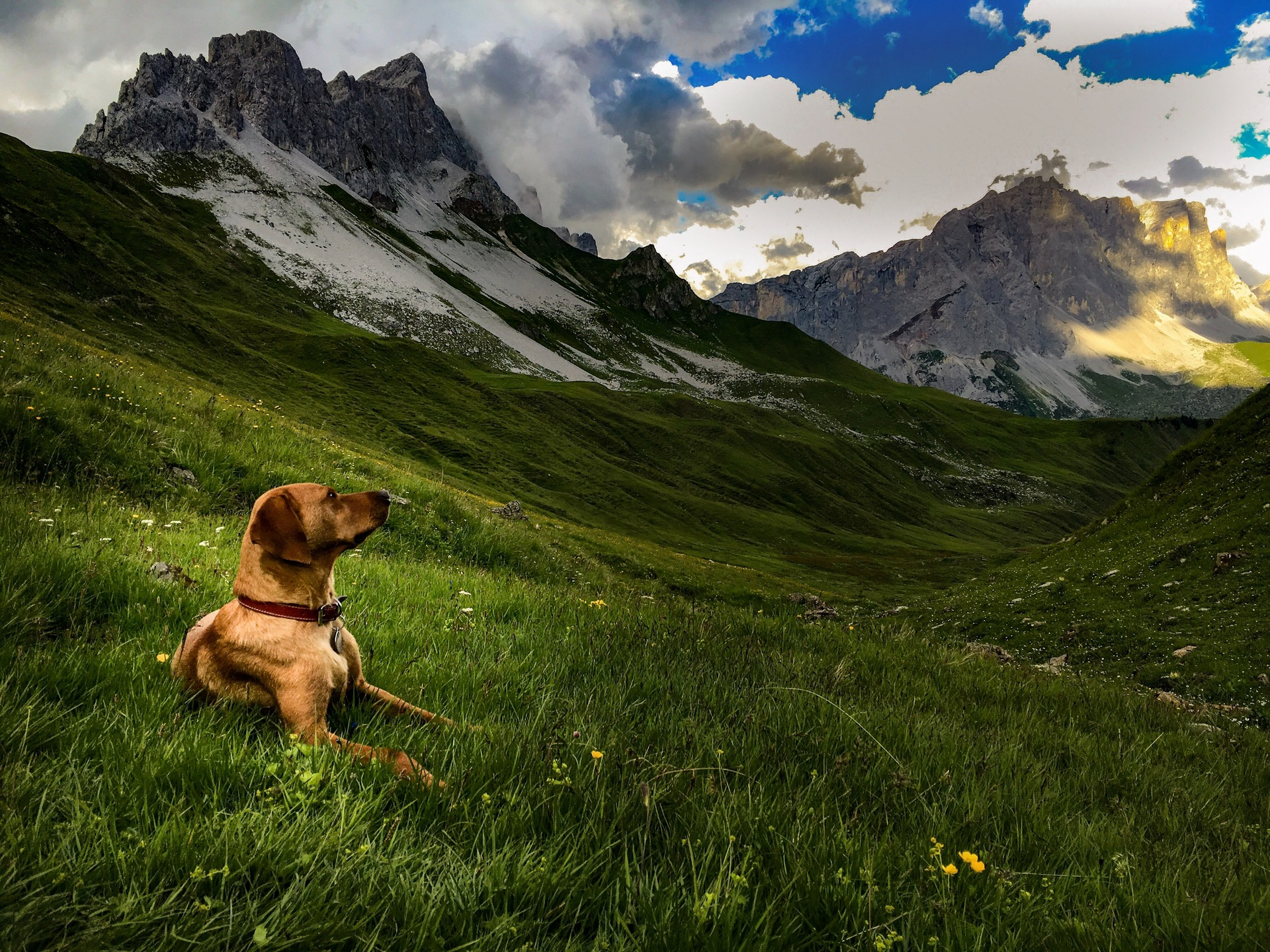 dog in front of a tent in the mountains.