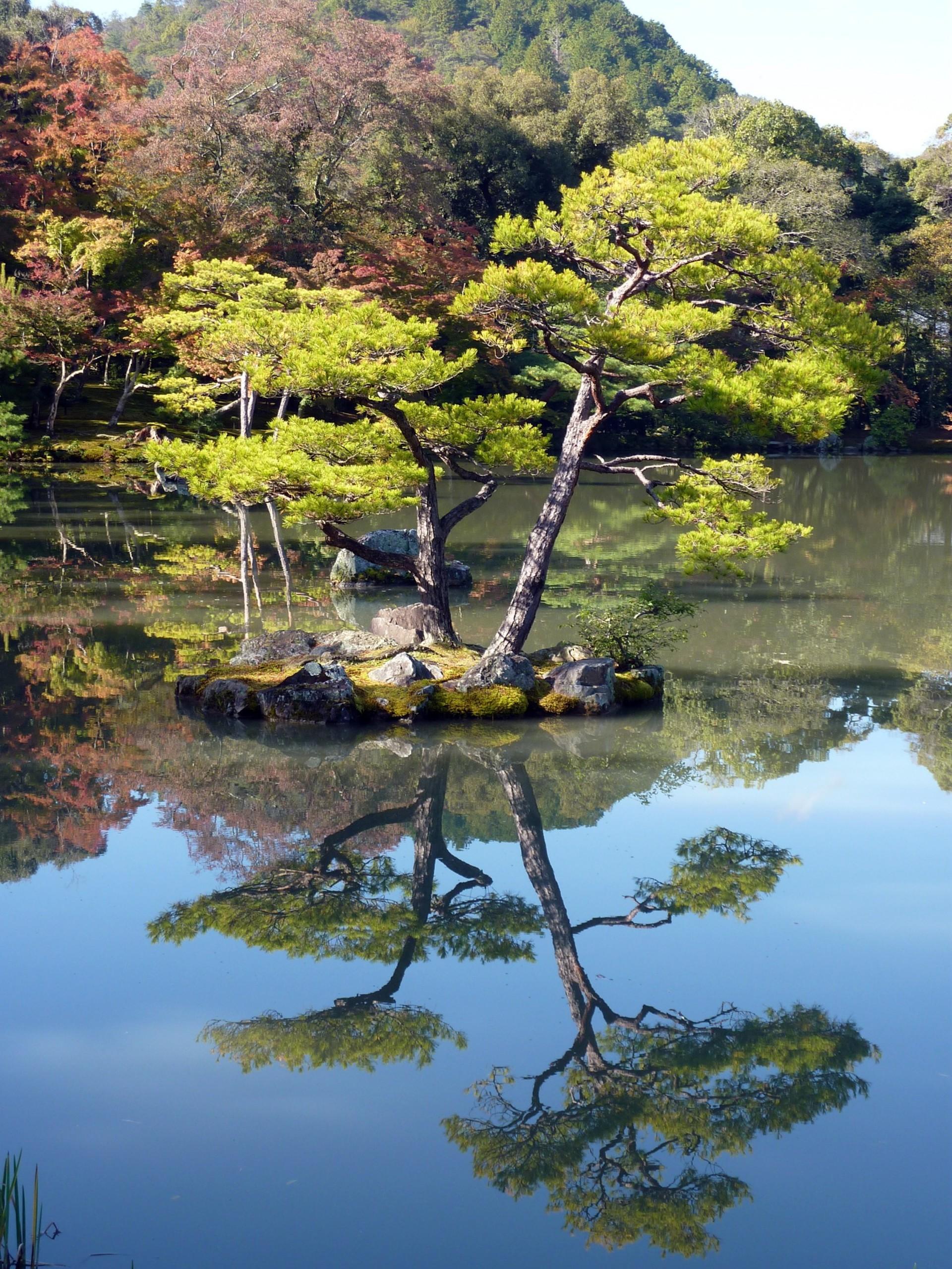 Japanese garden reflections | berbobio, branch, lake, landscape