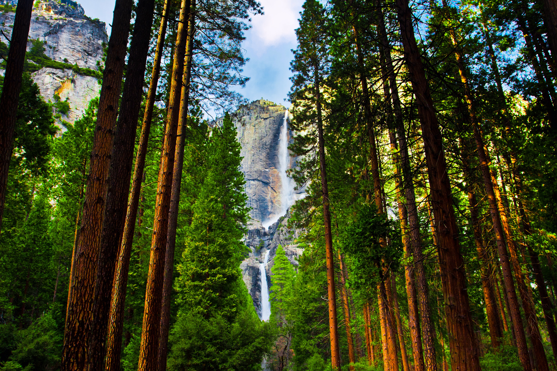 Yosemite falls among sequoias in Yosemite national park