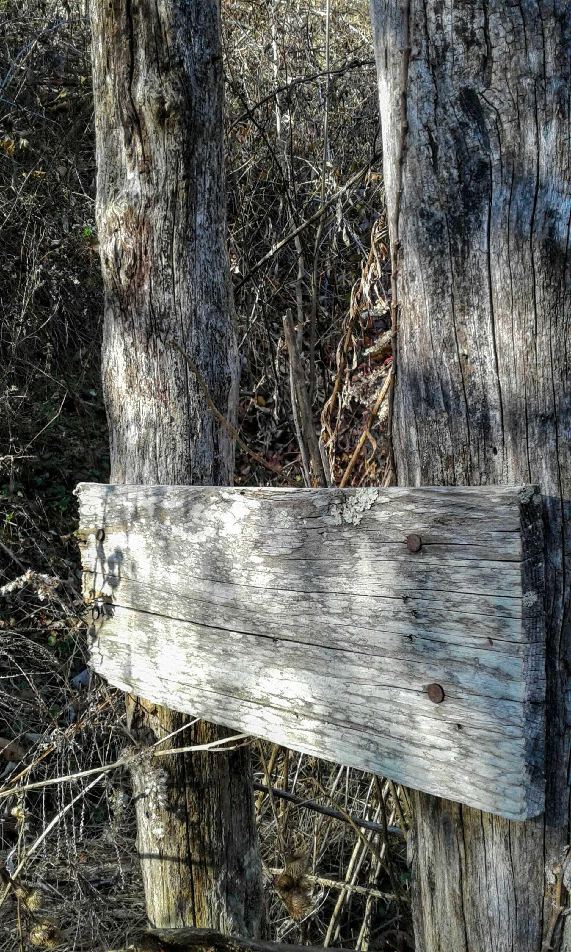 Wood | michelle2017, wood, wooden, log