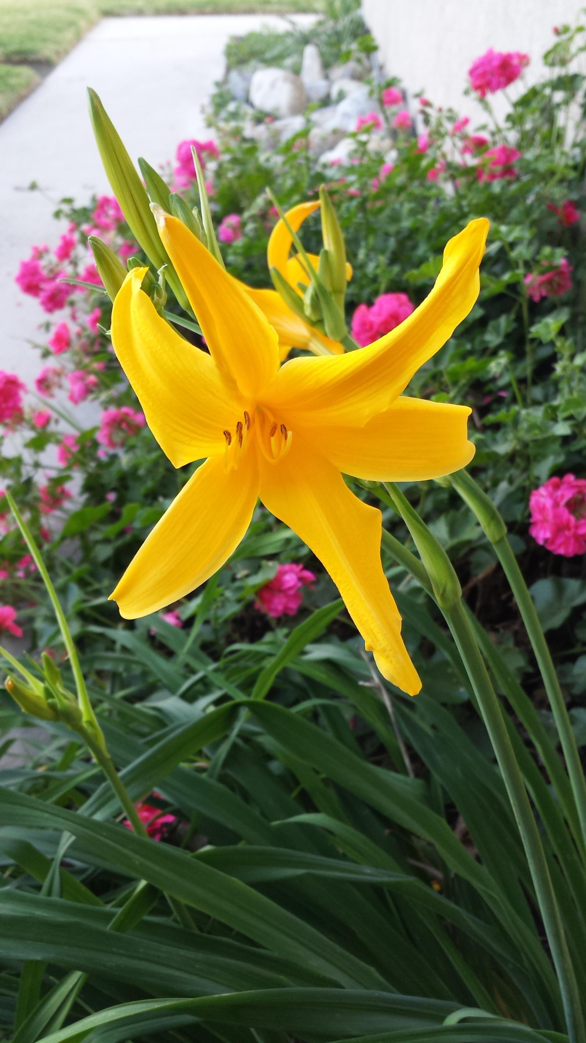 flower | nature, flora, garden, summer