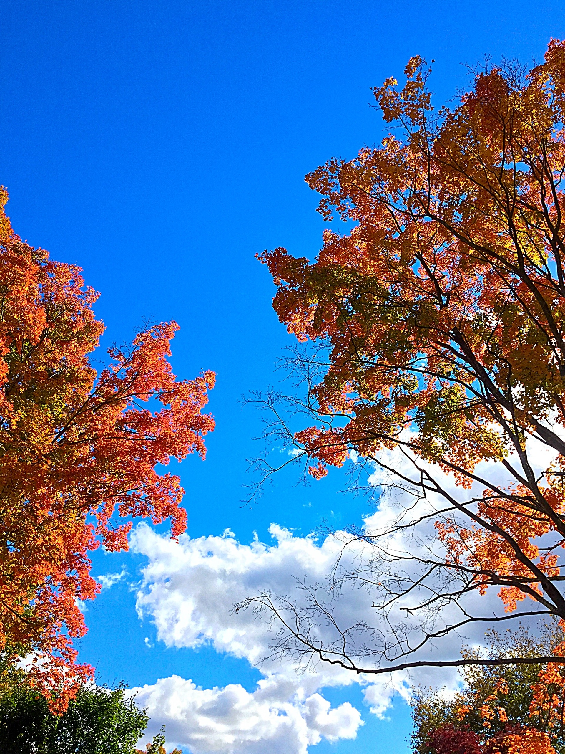 Low angle view of autumn trees against cloudy sky