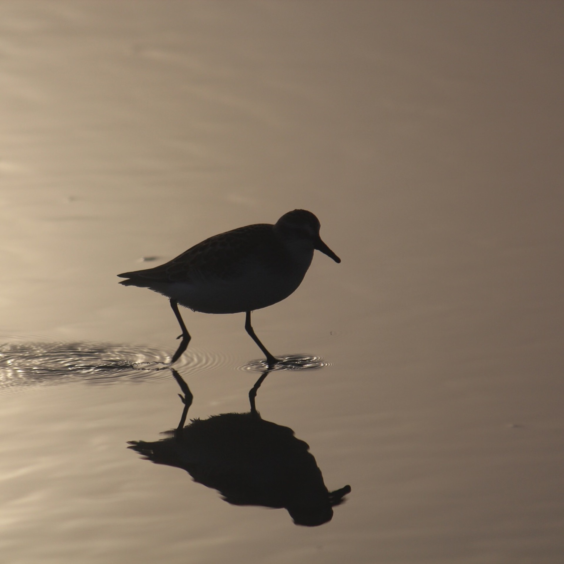 Silhouettes and shadows example photo