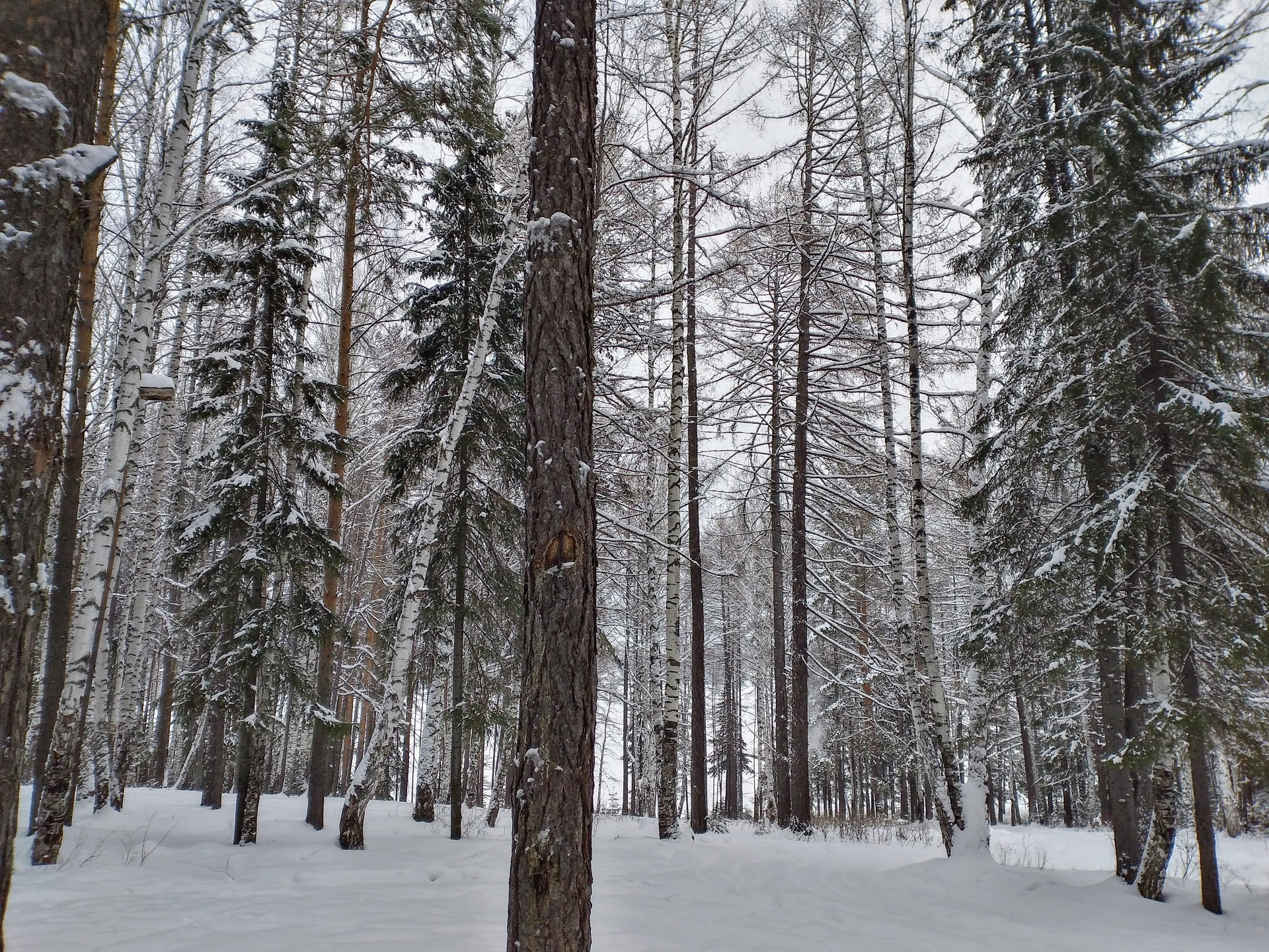 Winter nature example photo