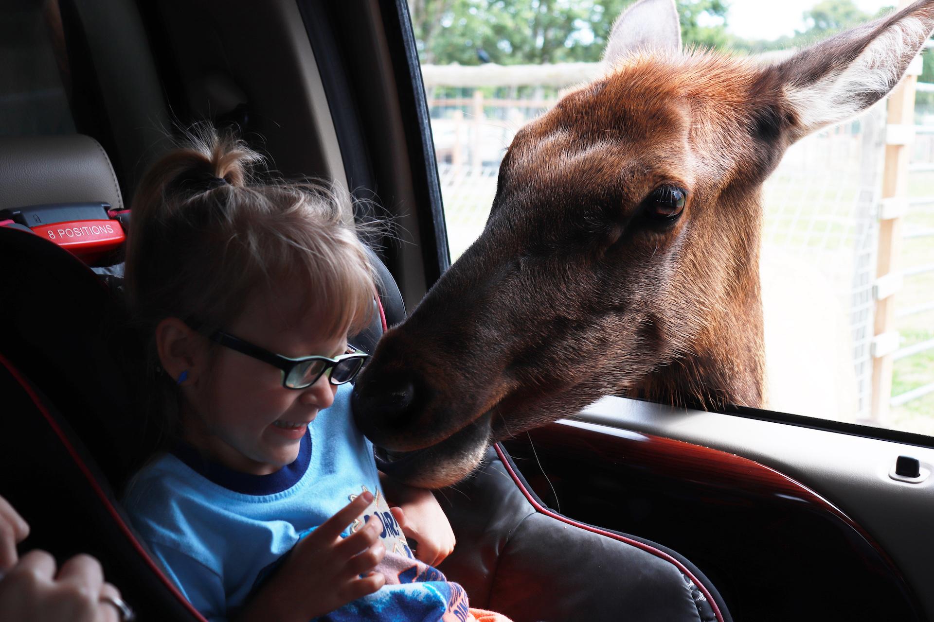 Kids' Week: Kids and Animals example photo